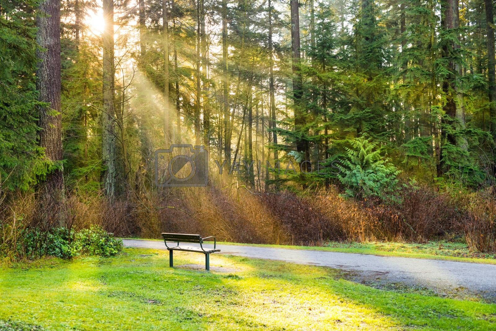 Bench in the green city park by vapi