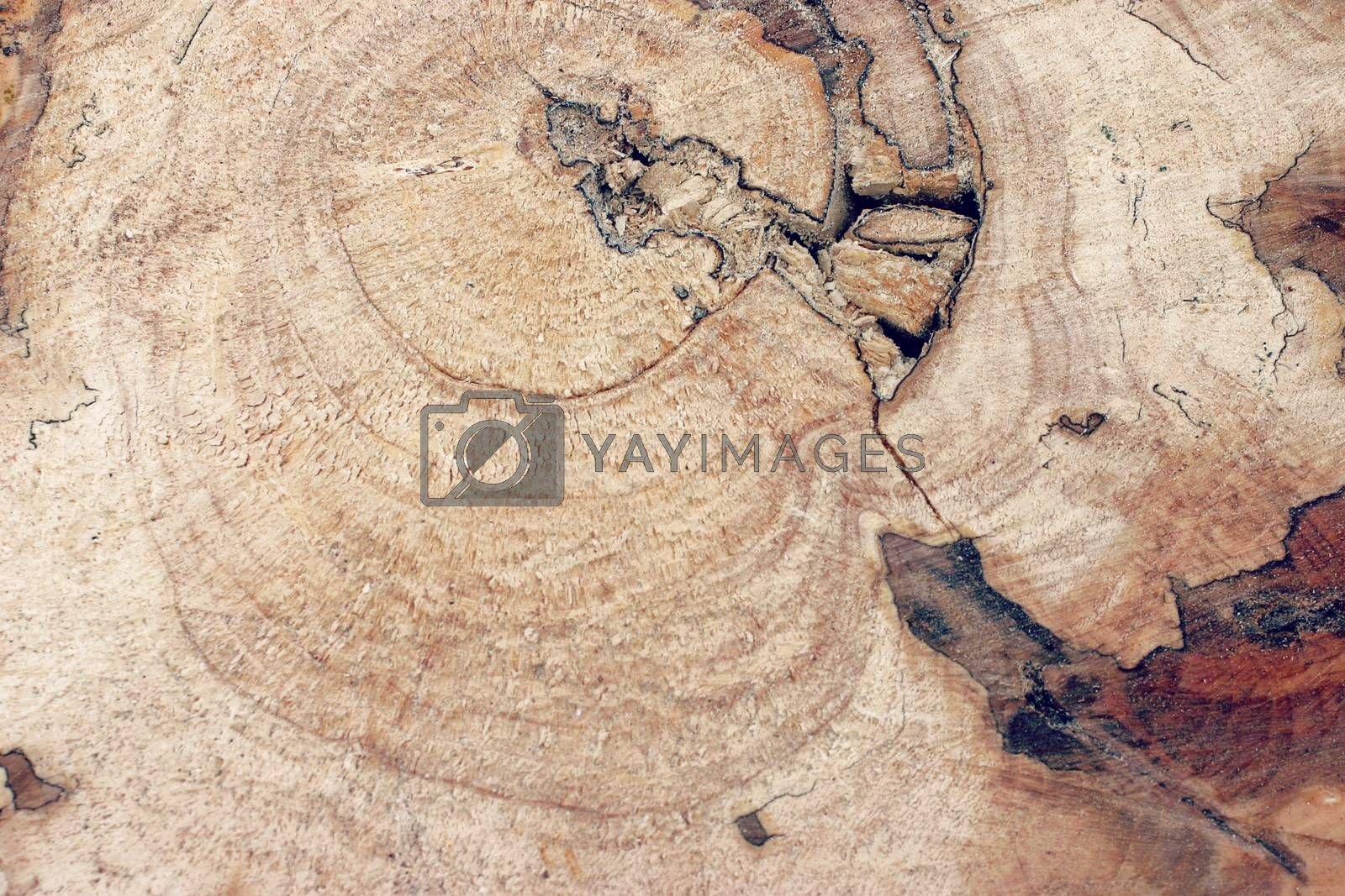 Picture of an old cracked wood background