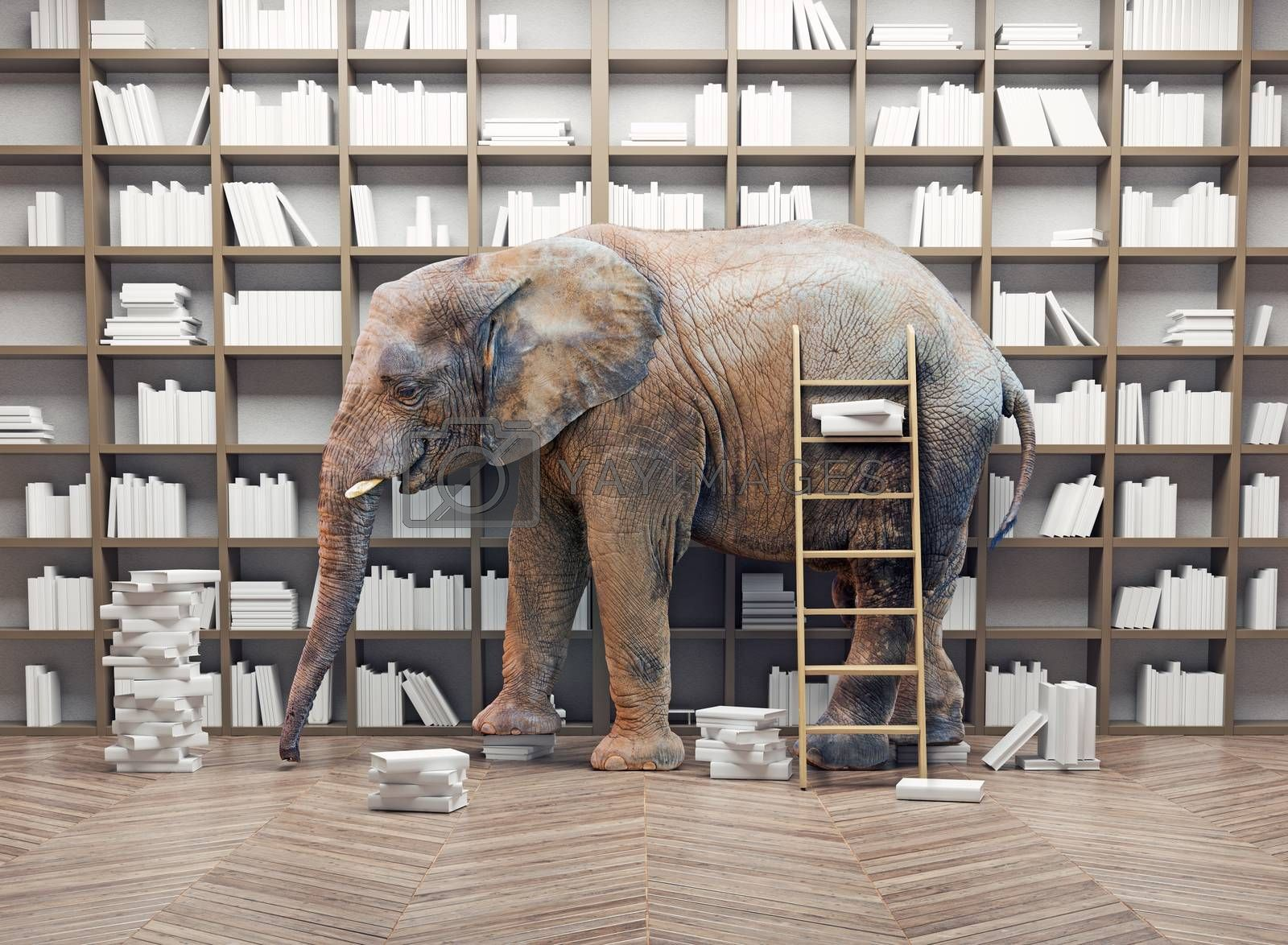 an elephant  in the room with book shelves. Creative concept