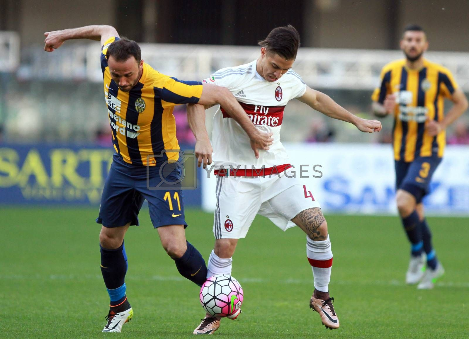 ITALY, Verona: Hellas Verona's forward Giampaolo Pazzini (L) vies with Milan's midfielder Jose Mauri during the Serie A match between FC Hellas Verona v AC Milan on April 25, 2016. Luca Siligardi scored on a late free kick to secure the win for his team in the 95th minute.