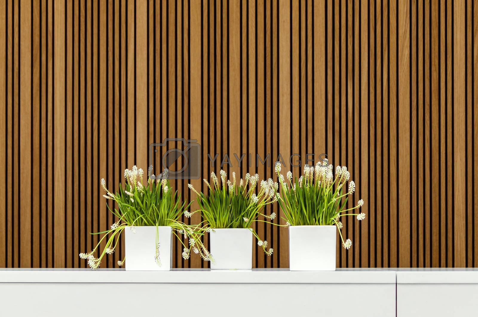 Modern interior detail with three blooming flower pots
