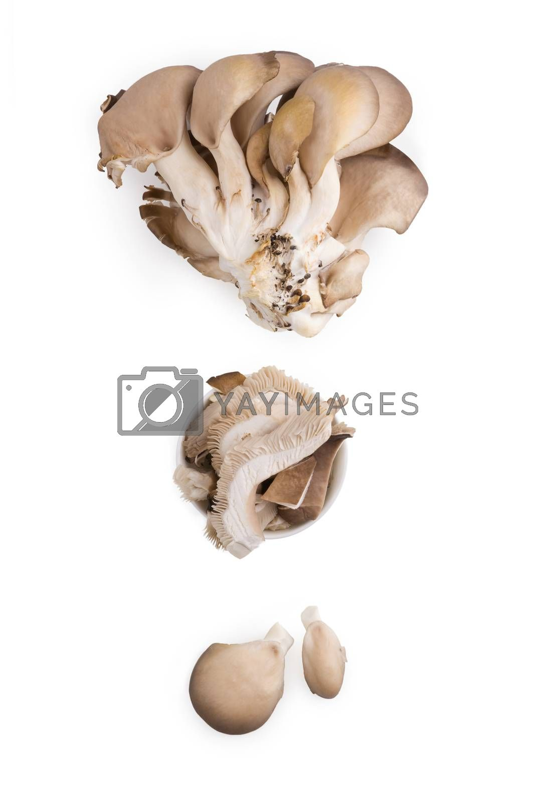Fresh oyster mushrooms isolated on white background.