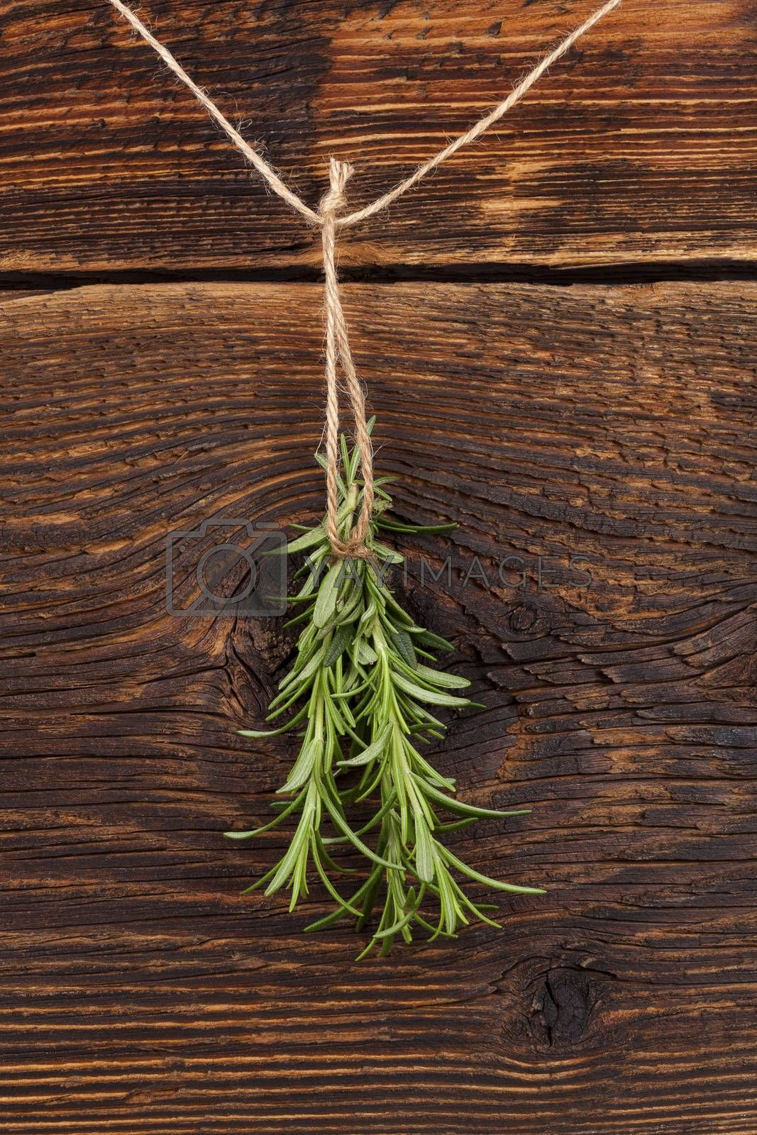 Rosemary herb hanging and drying on rustic wooden background. Culinary aromatic herbs.
