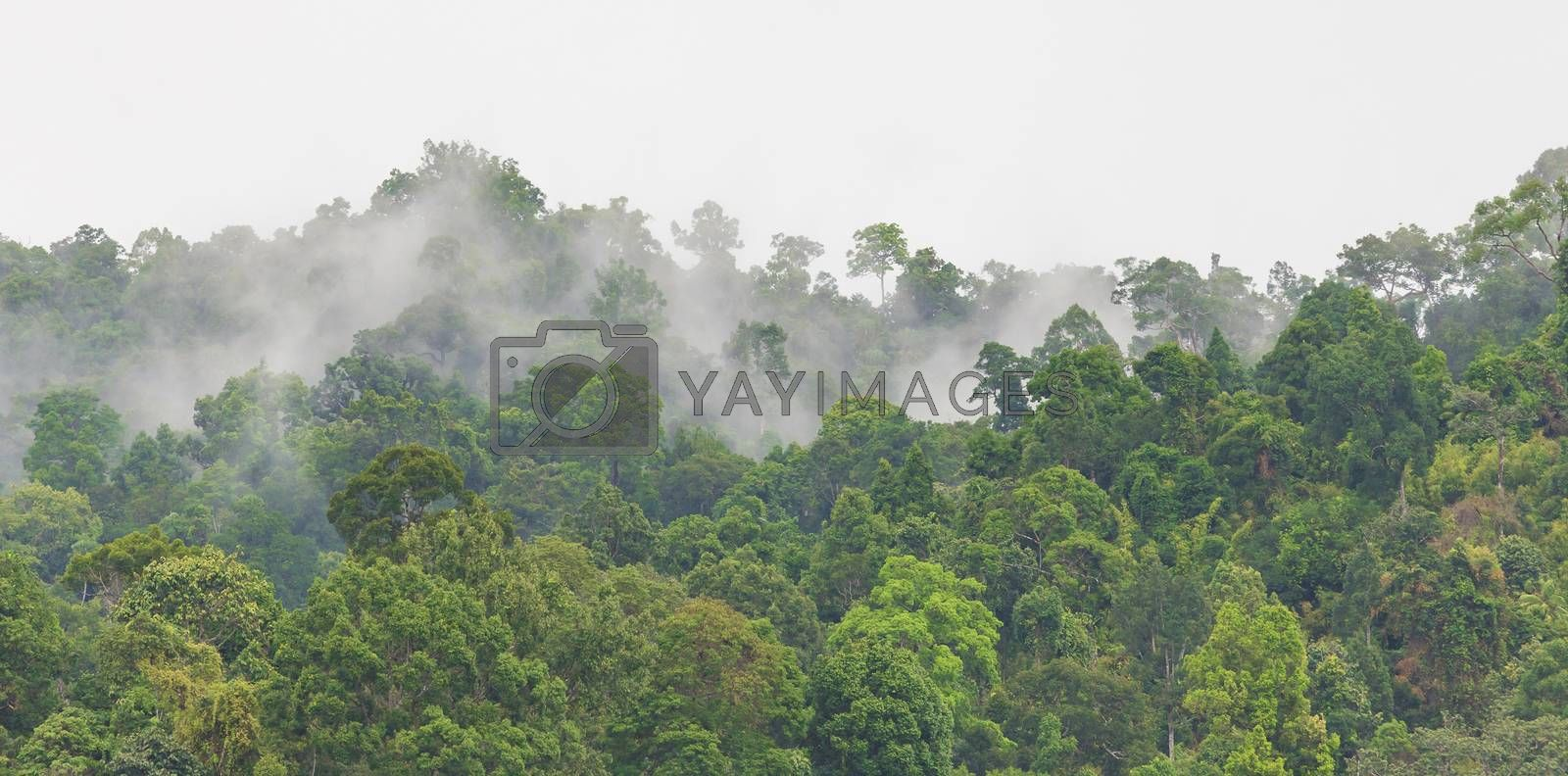 White fog floating above green trees in jungle with white sky as background