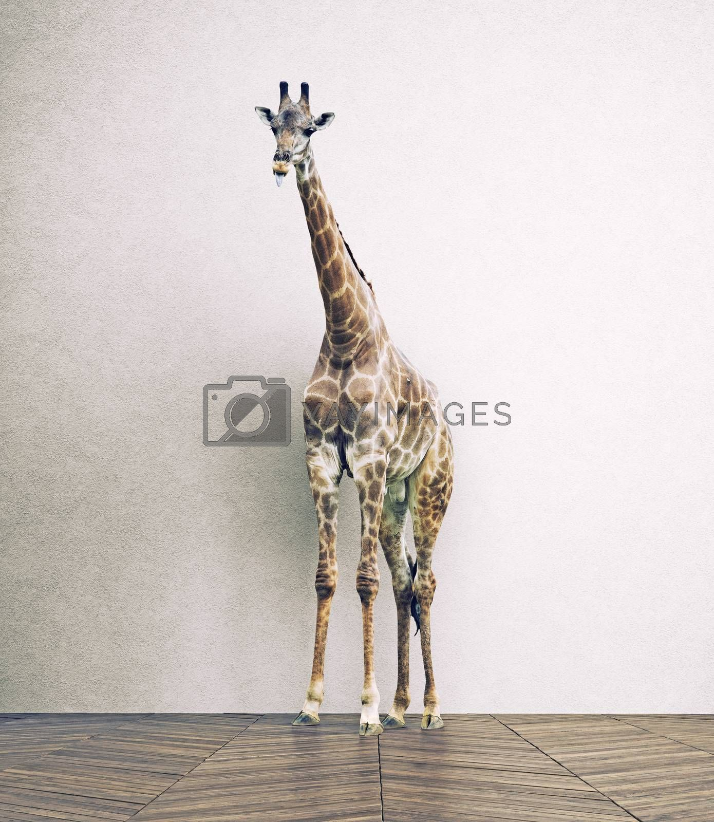 the giraffe baby  in the white room. Photo combination concept