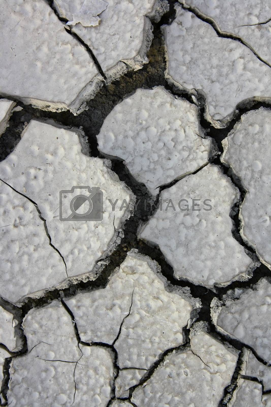 Royalty free image of Drought Soil without grass and global warming by mturhanlar