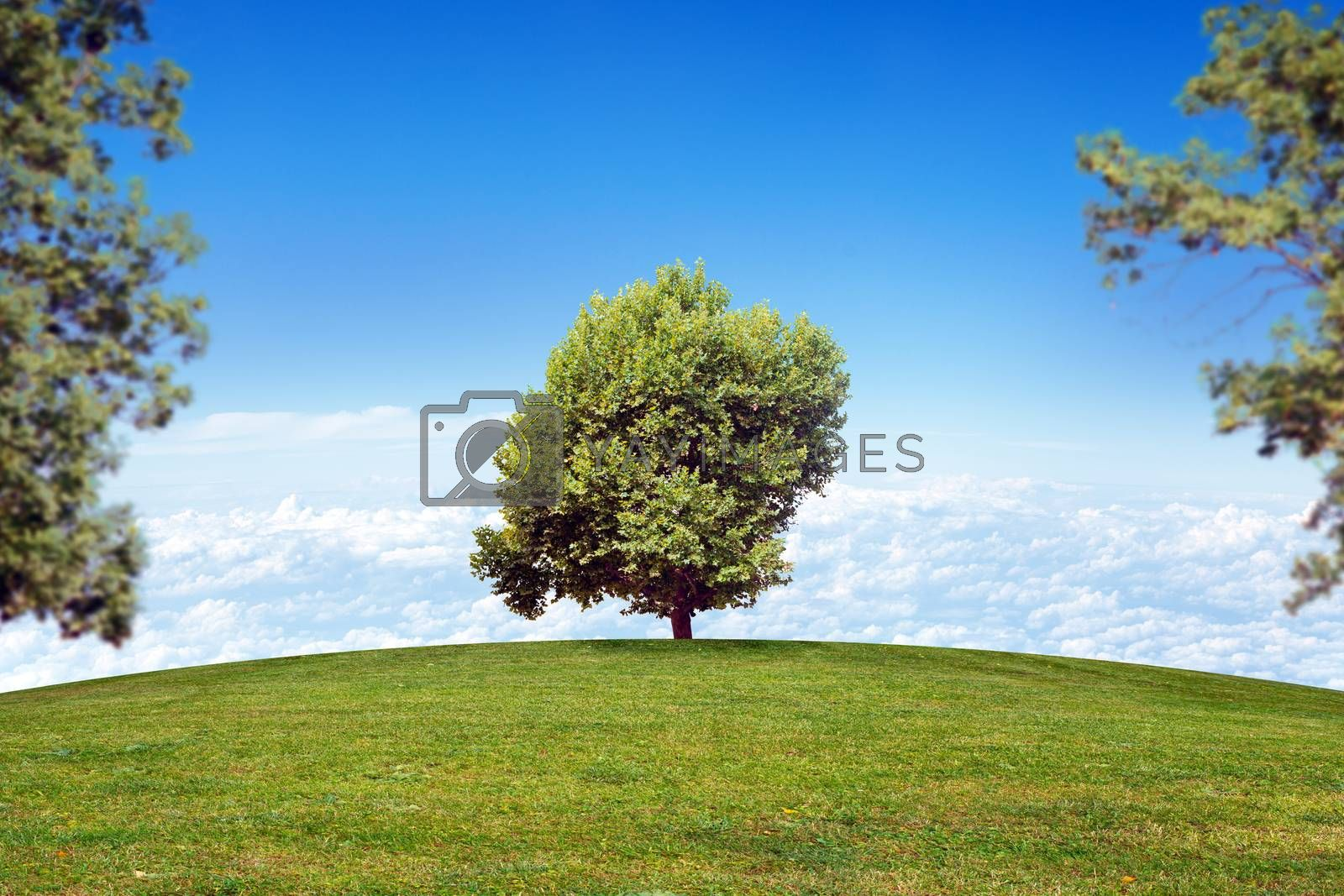 Summer landscape picture with blue sky and green tree
