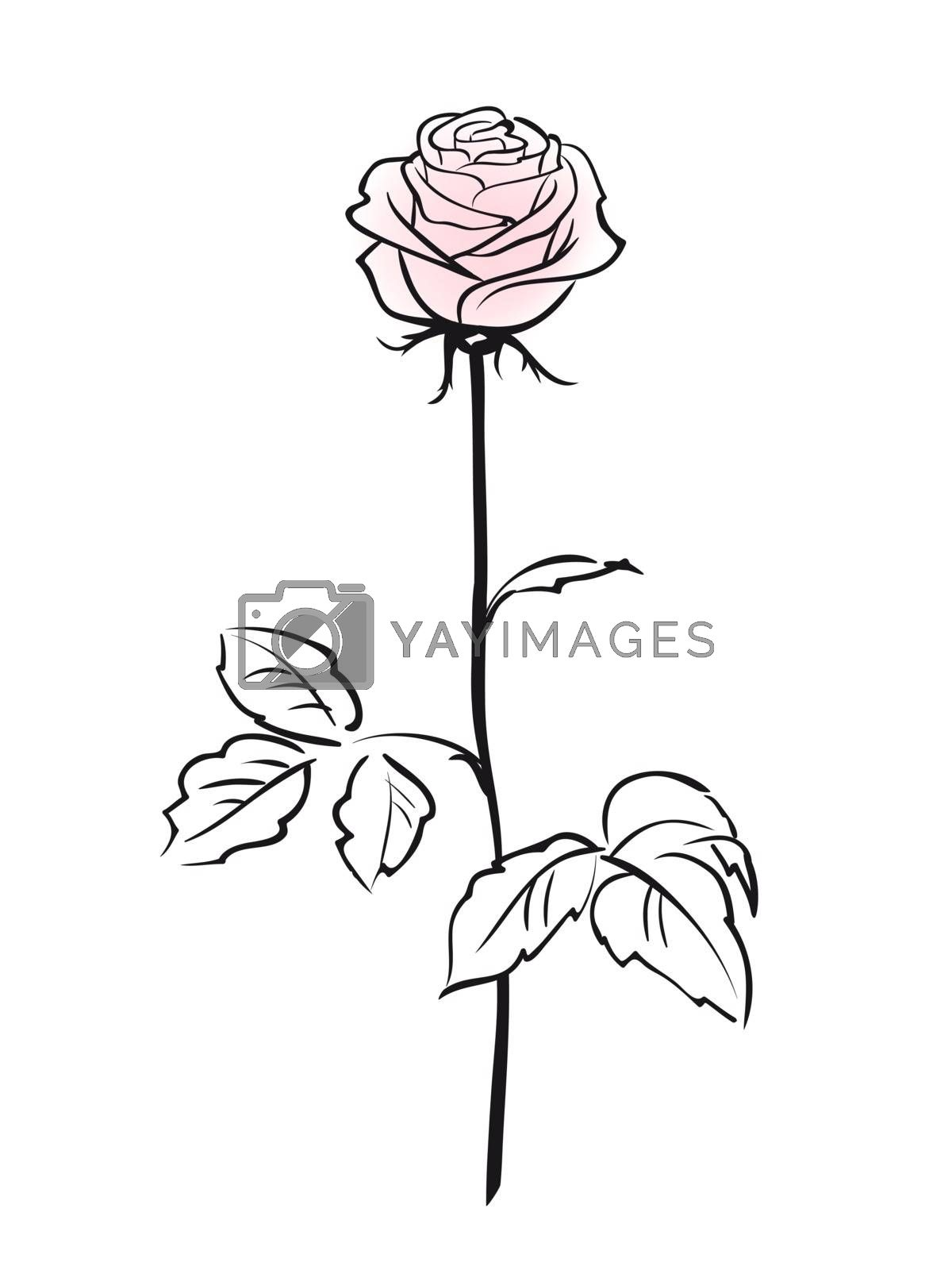 Pink rose flower isolated on the white background, vector illustration