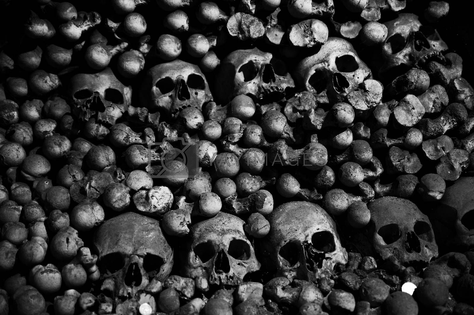 crazy scary collection of skull and bones