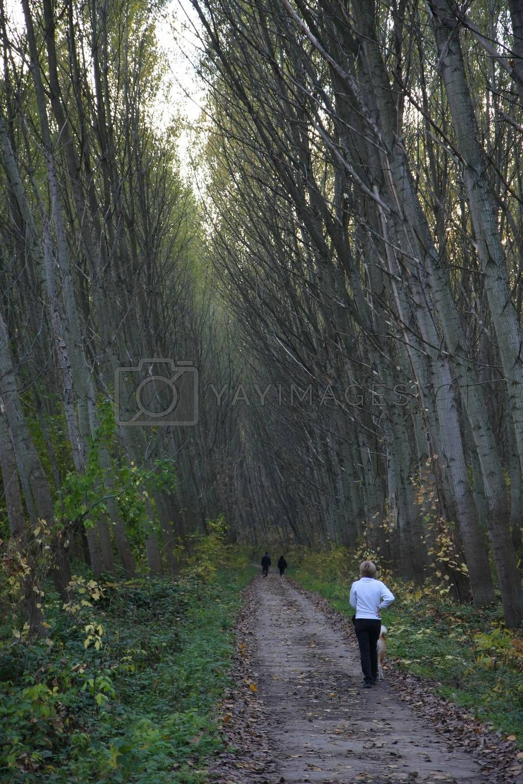 Woman and her dog walking in the forest
