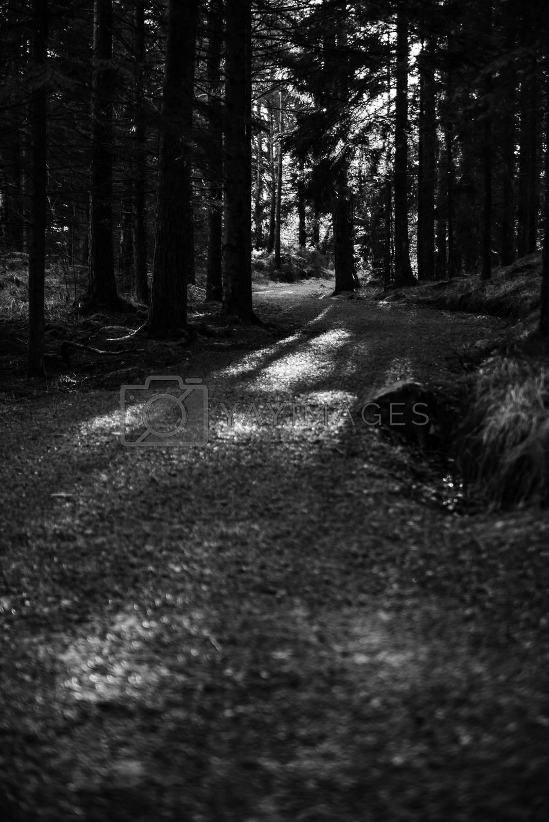 En skogssti svinger seg frem mot lyset.