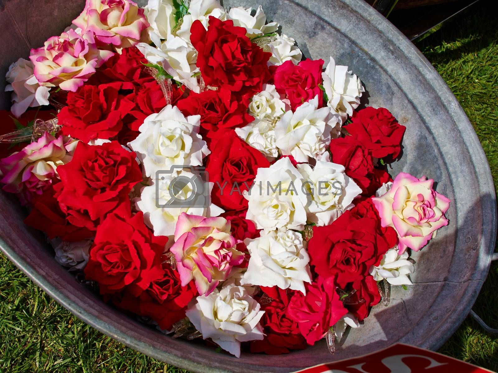 Artificial red and white roses blossom arranged in a tin container