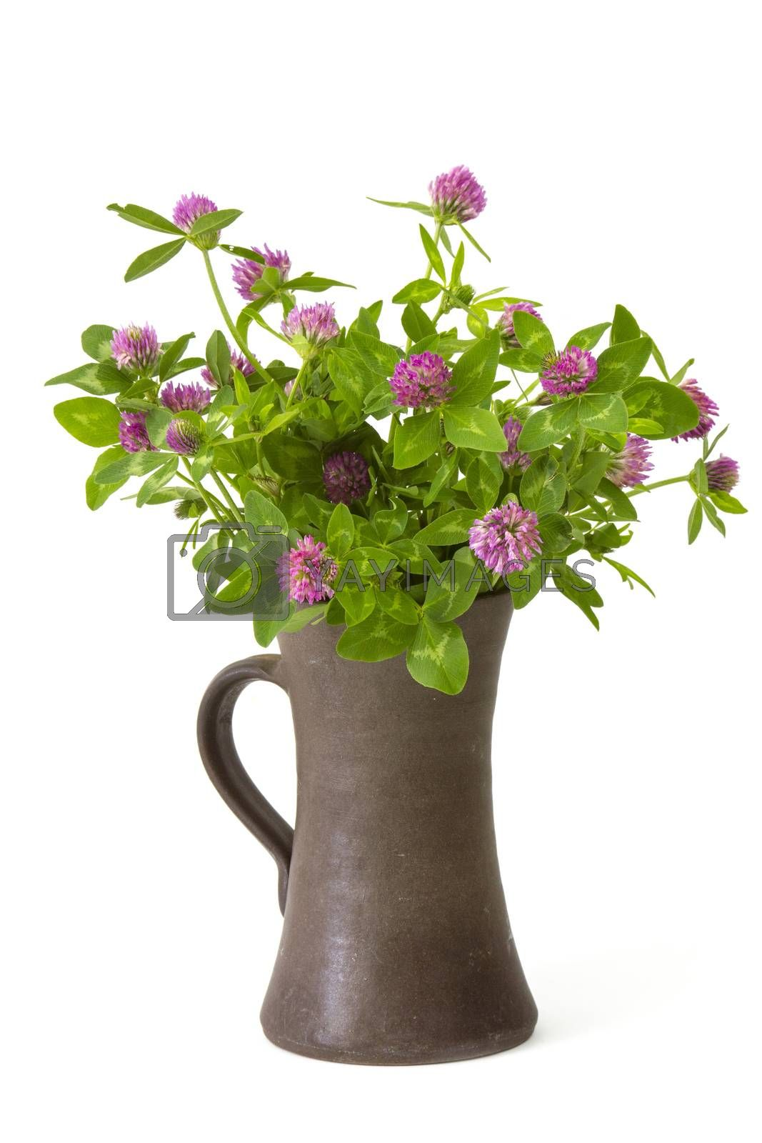 Bunch of clover in a vase