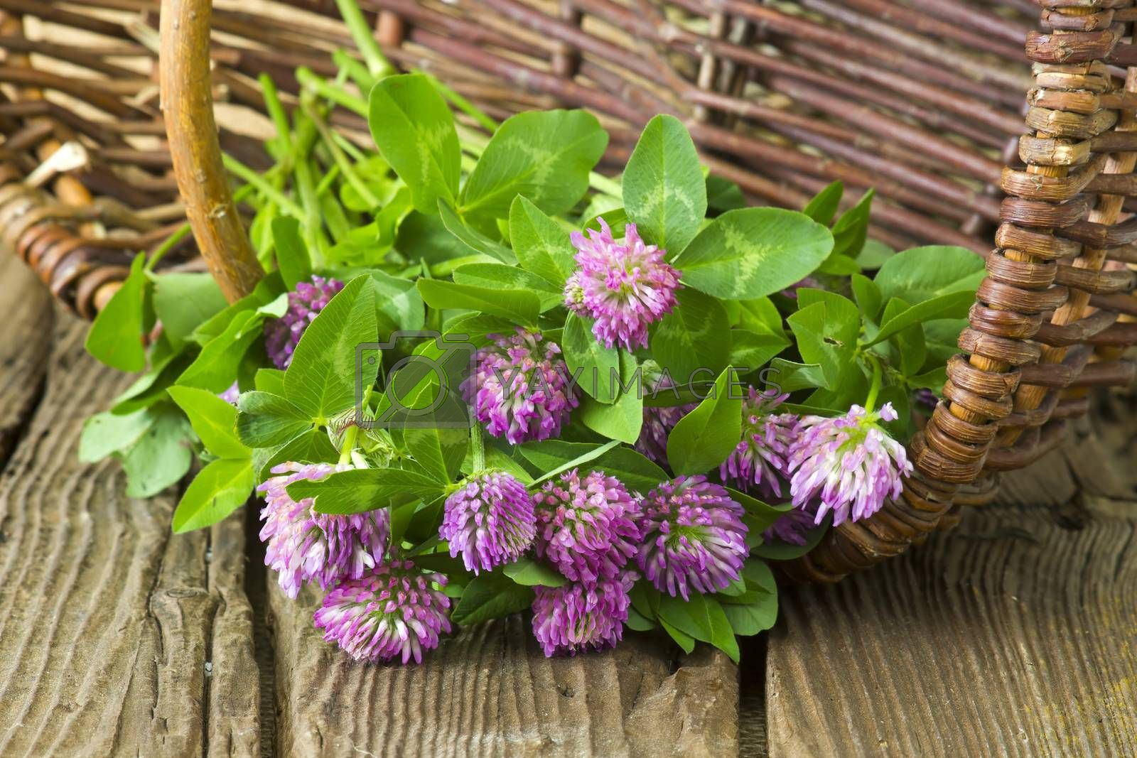 basket with clover on wooden background