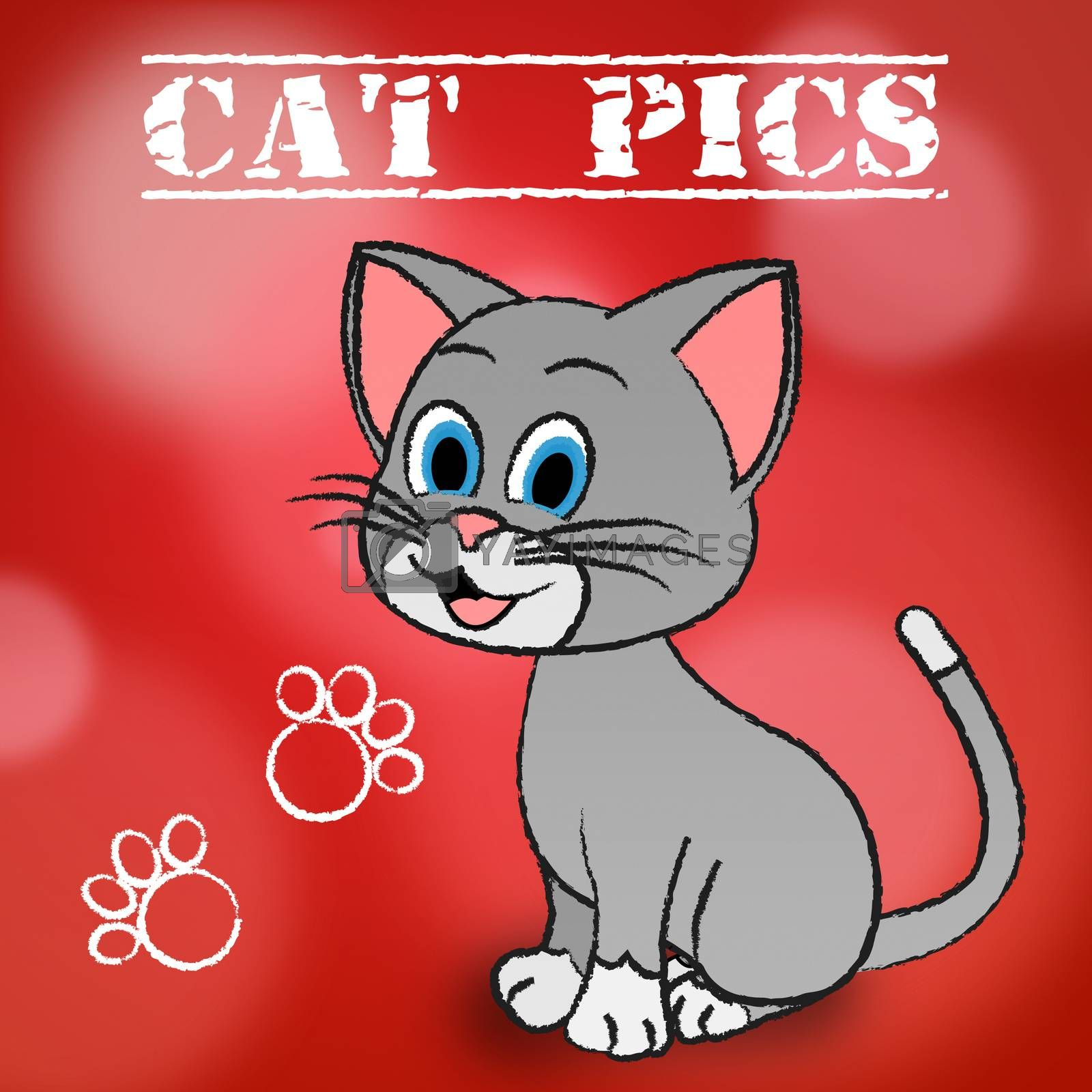 Cat Pics Meaning Photos Puss And Pictures