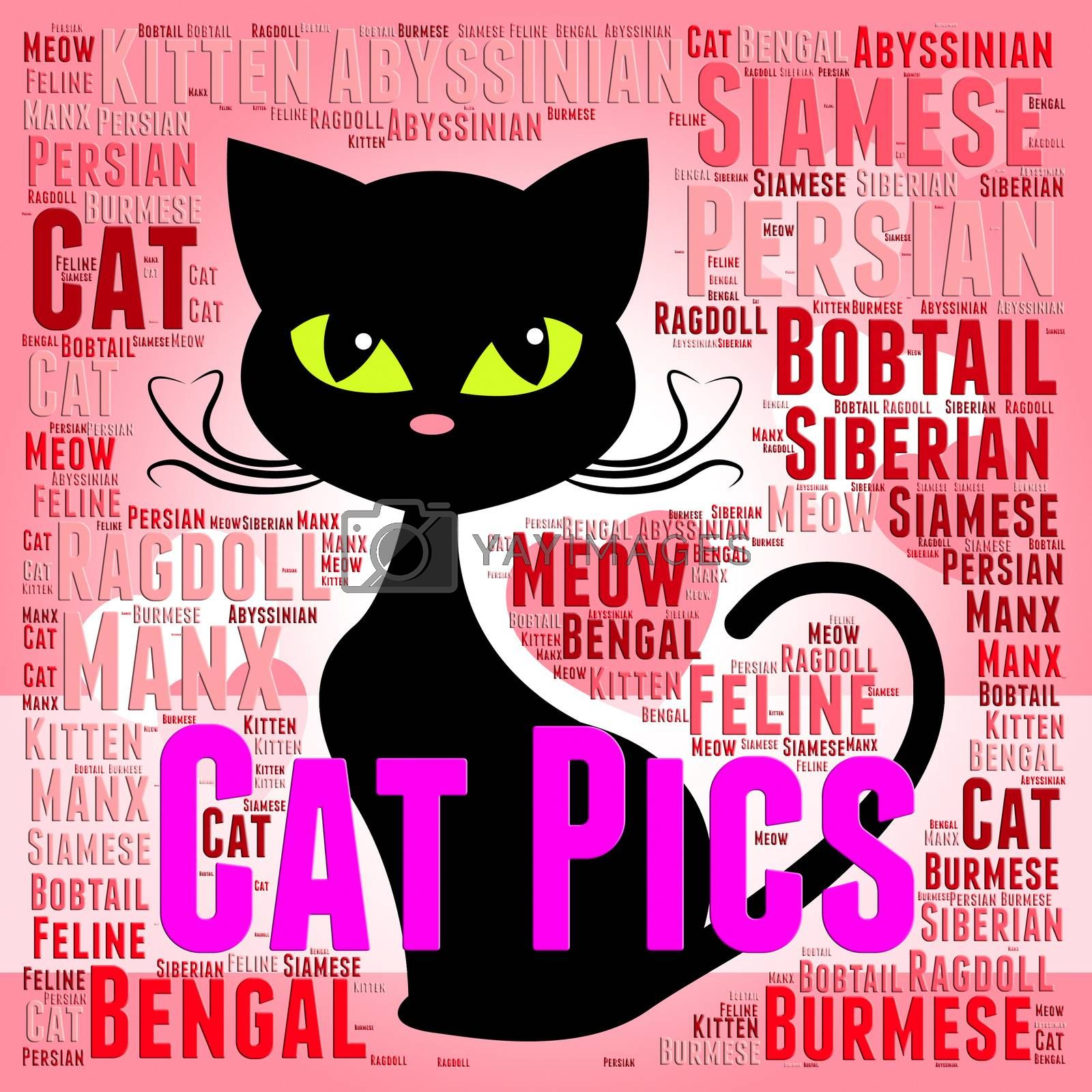 Cat Pics Meaning Photo Puss And Image