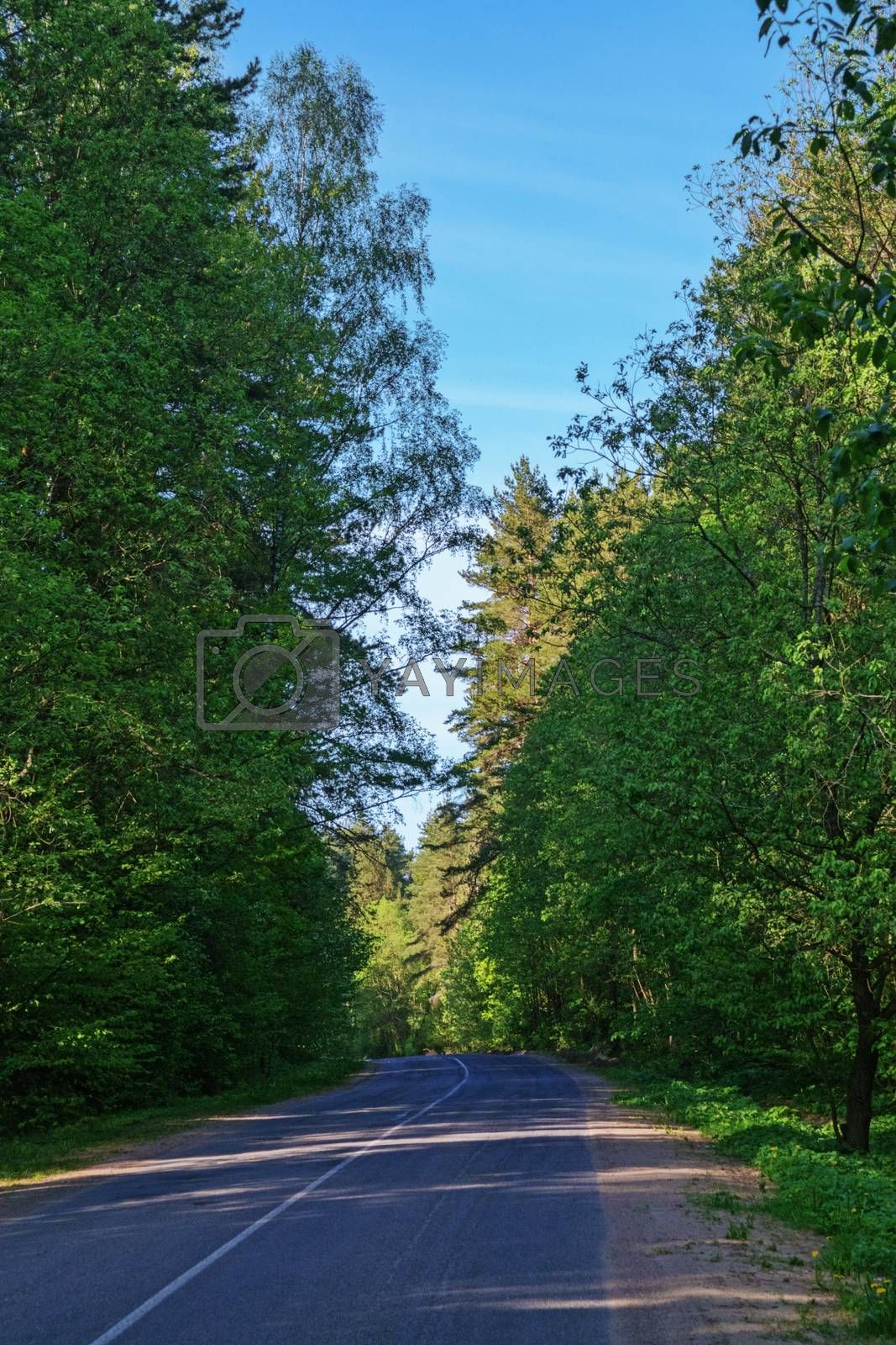 Asphalt road in the shade of the trees.