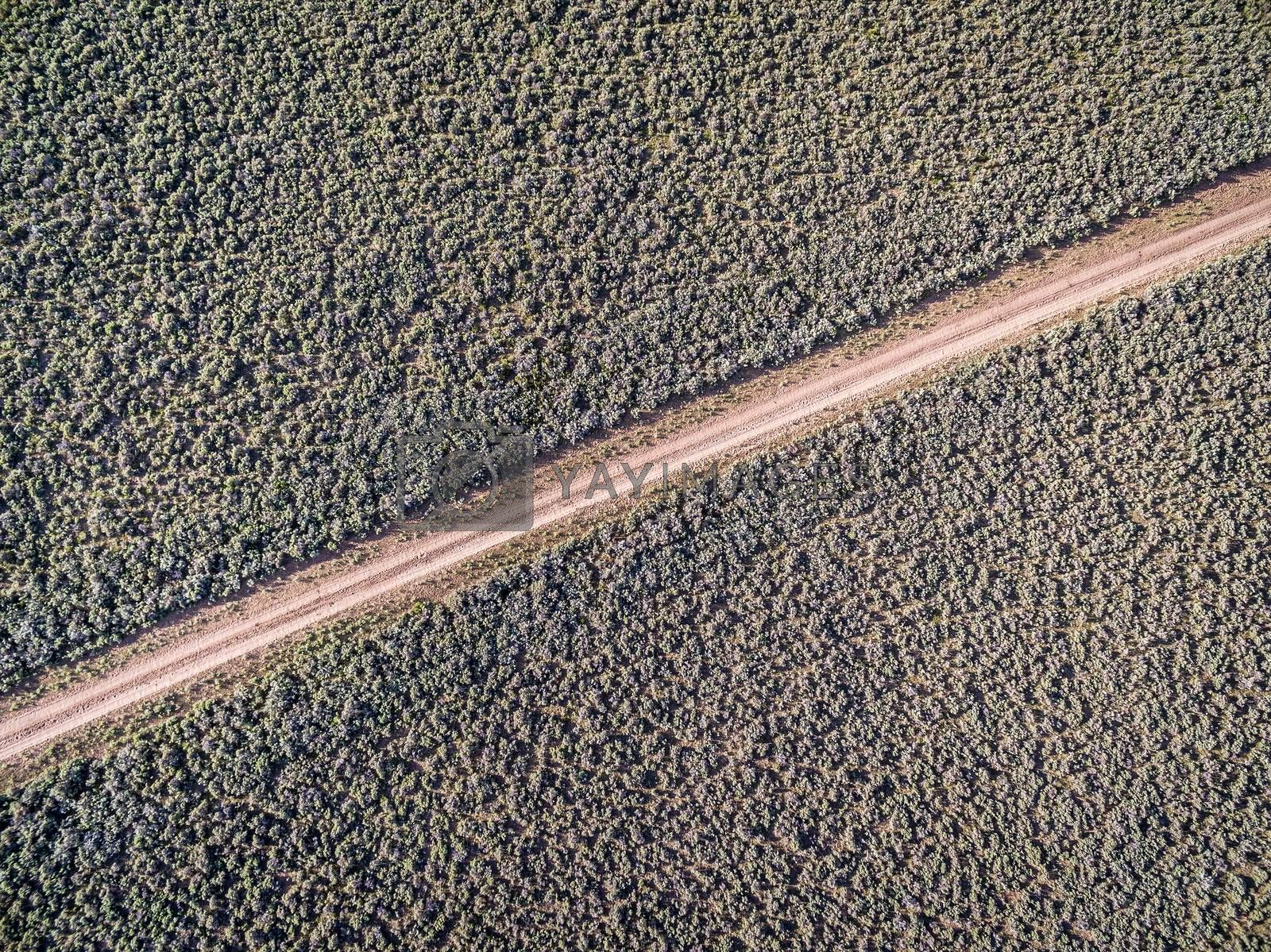 backcountry dirt road through fields covered by sagebrush - aerial view