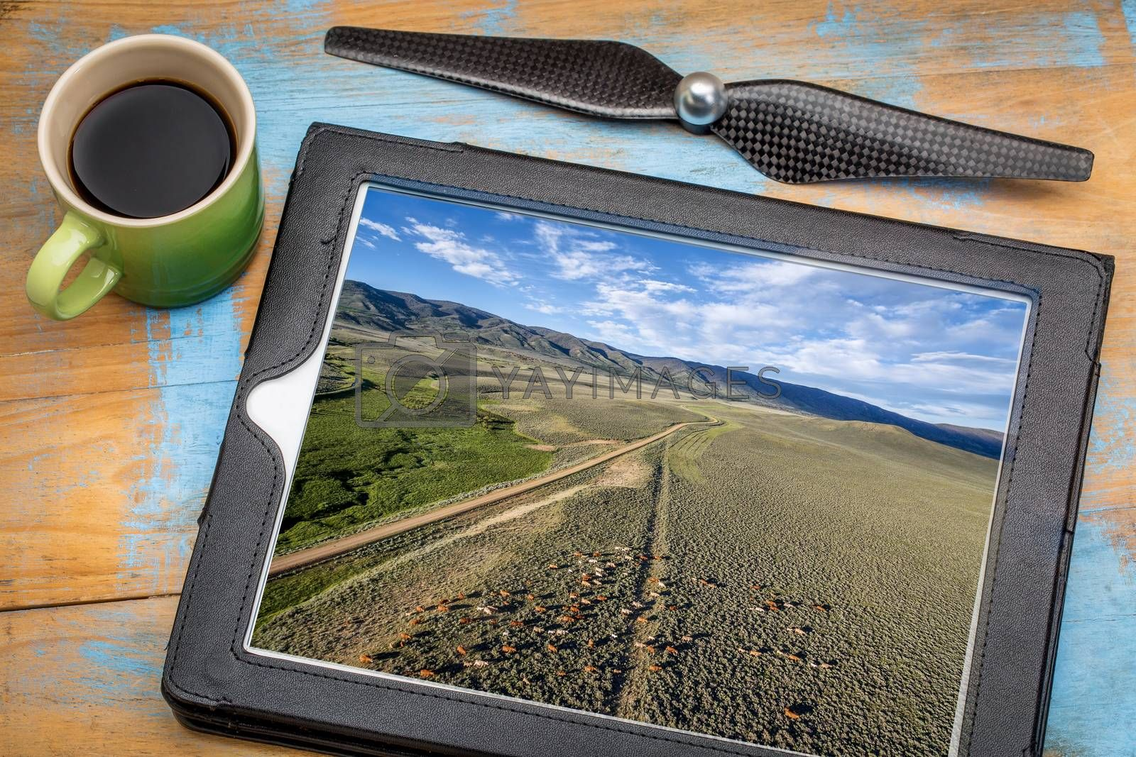 reviewing aerial picture on a digital tablet with a cup of coffee - foothills of Medicine Bow Mountains with a dirt road and cattle, North park, Colorado