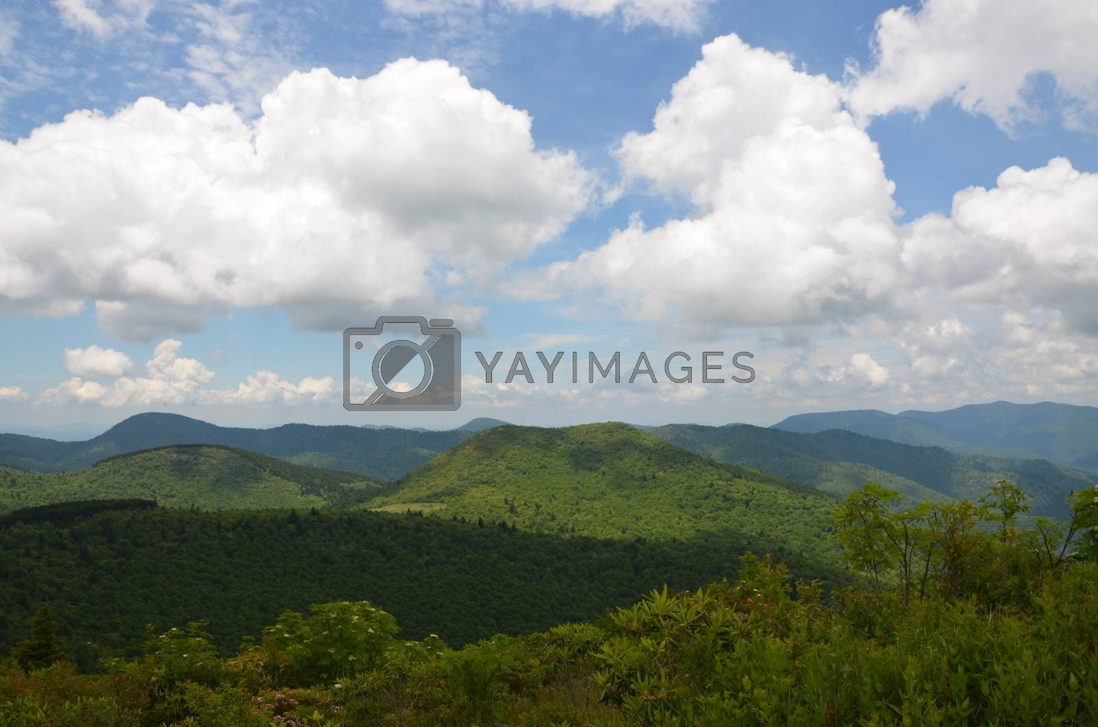 View along the Art Loeb trail in North Carolina. This is near Black Balsam knob.