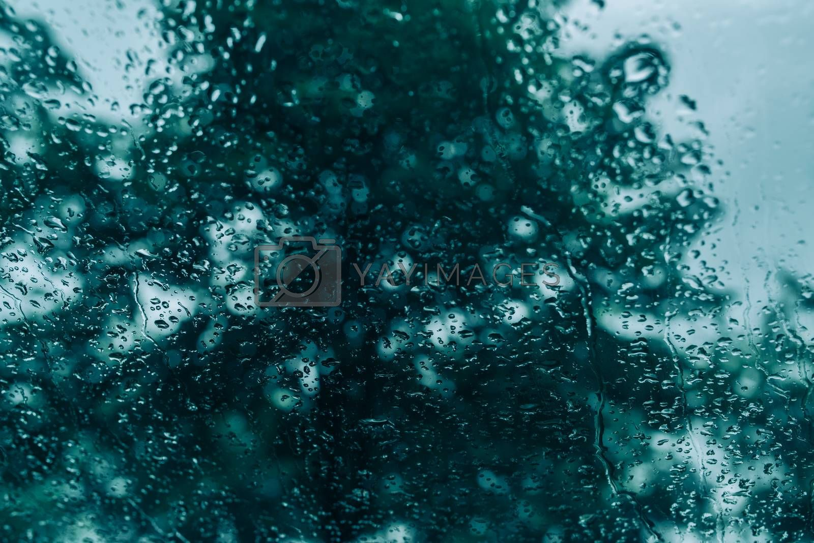 Raindrops on window pane, blur treetop in background, selective focus