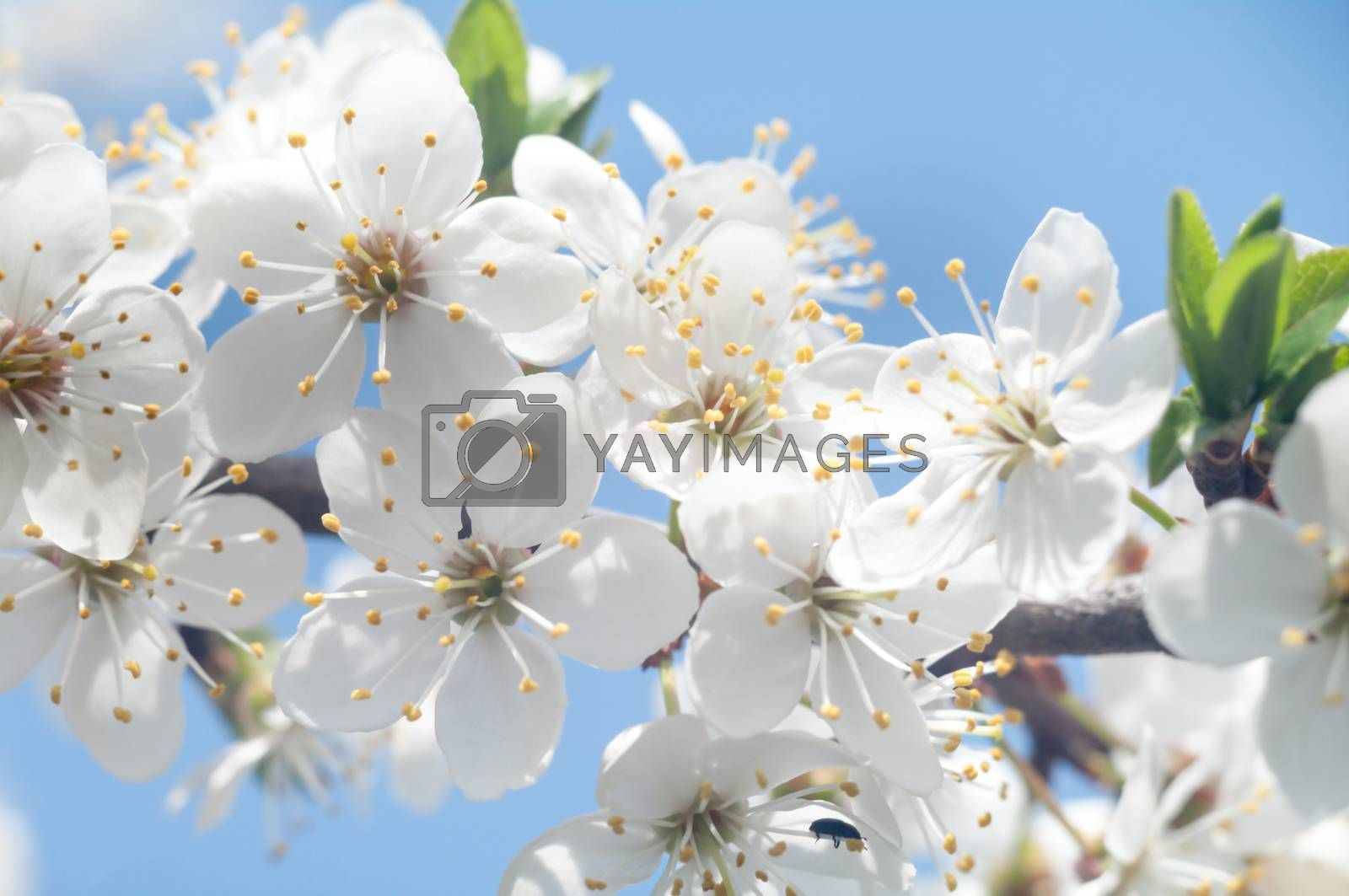 flowers as a colorful background, macro photo, nature series