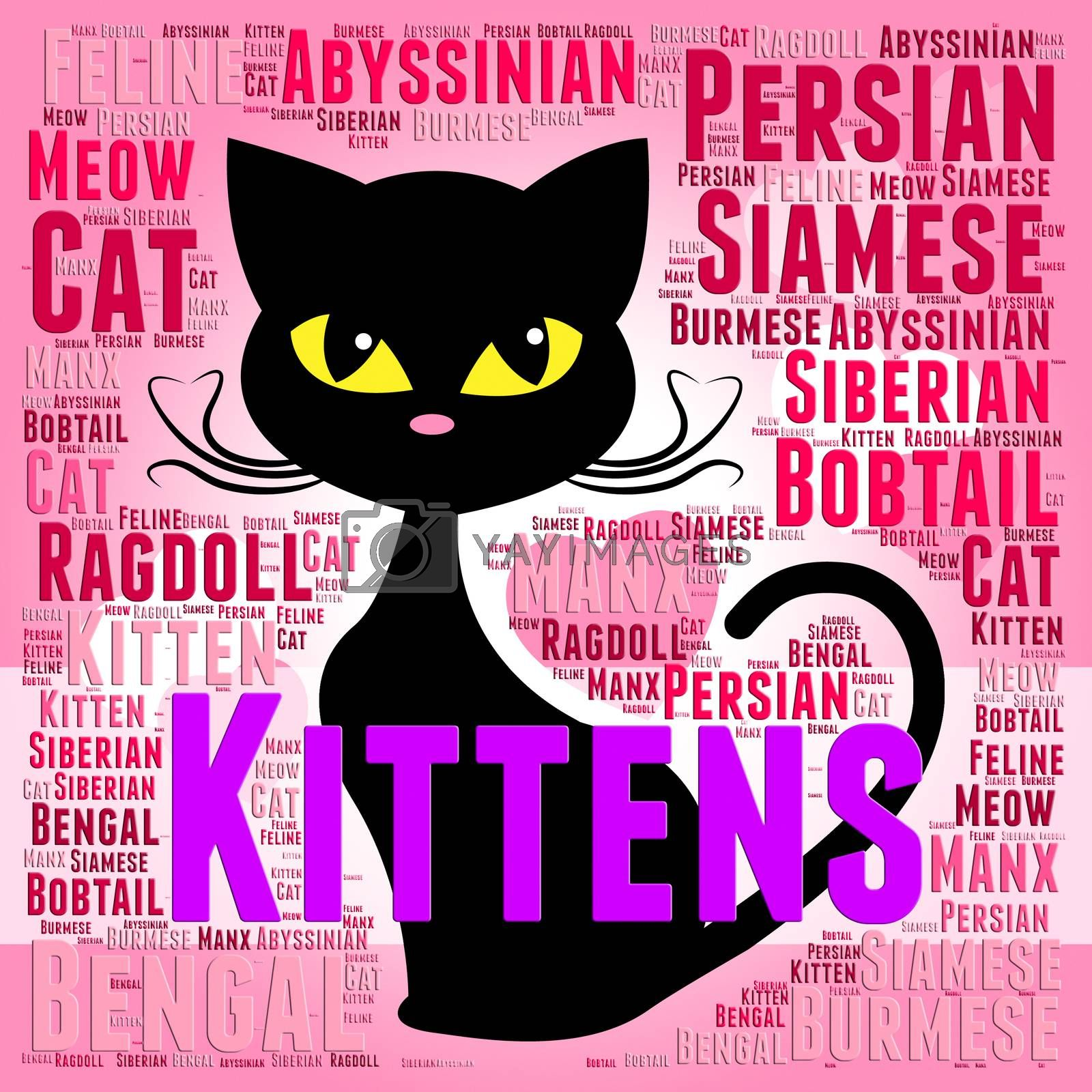 Kittens Words Showing Domestic Cat And Pet