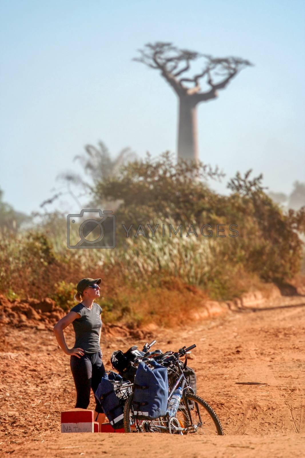 Cyclist resting in the famous Avenida de Baobab near Morondava in Madagascar