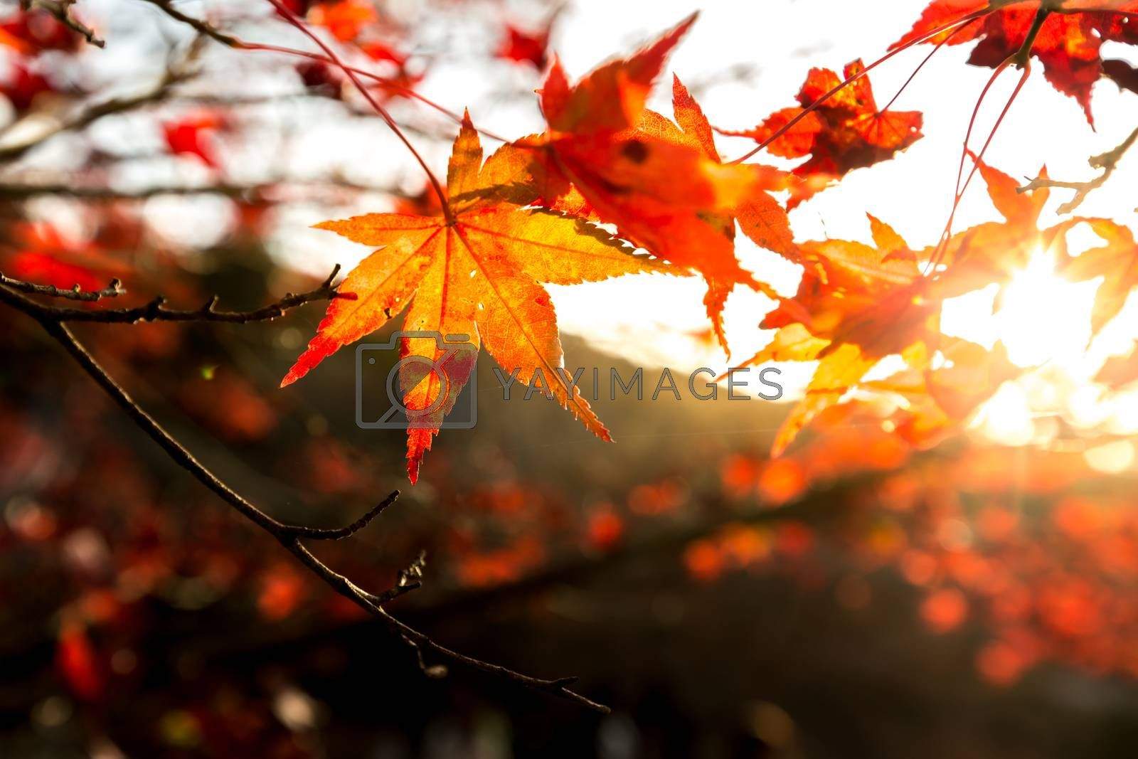 autumn background with free copyspace