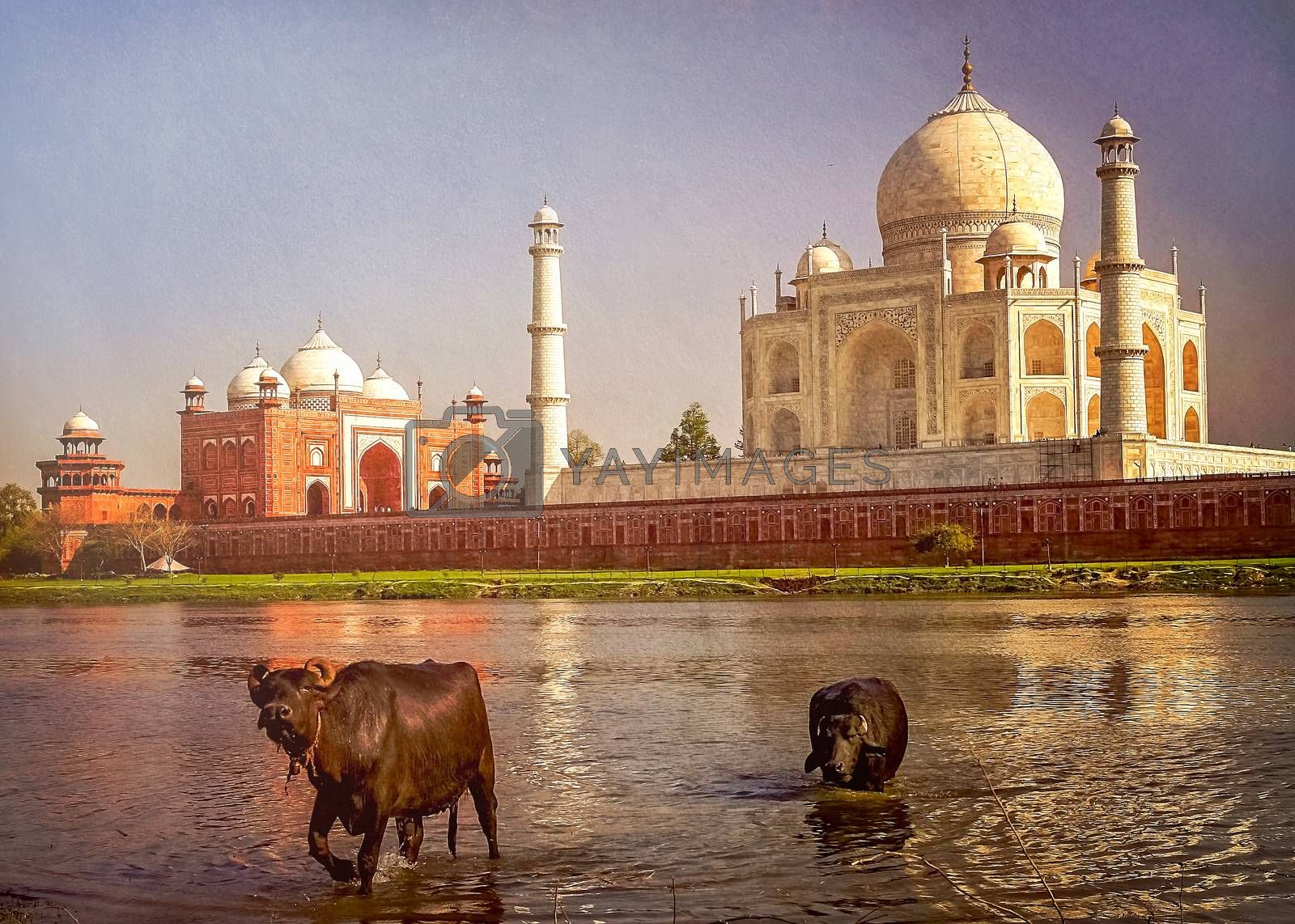 Royalty free image of Taj Mahal and the river by pawopa3336
