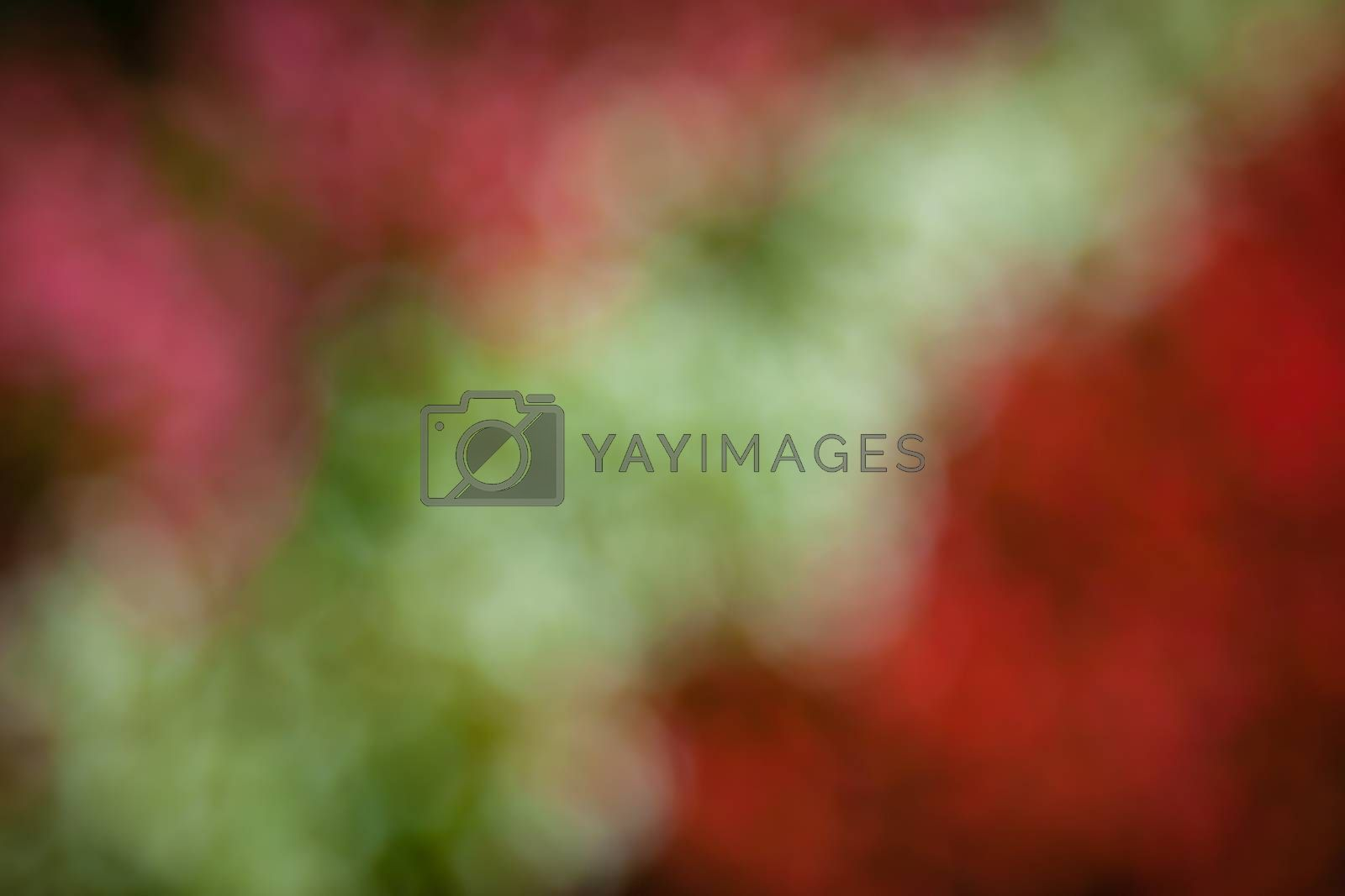 Diffused autumn colors of a red and purple leaves