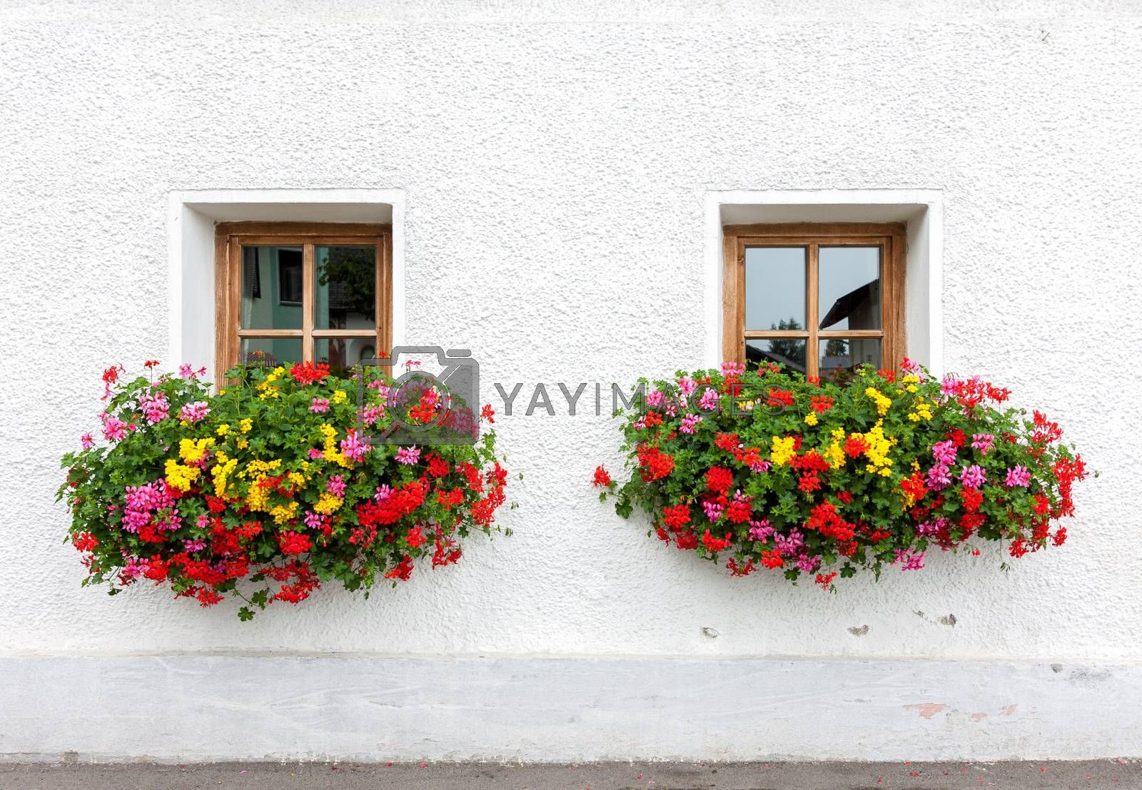 Two windows with flowers of traditional alpine house in Austria