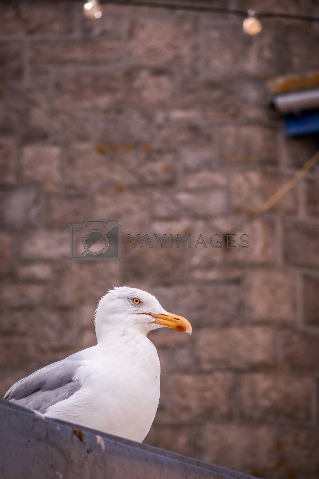 Seagull sitting on a porch and admiring sea view
