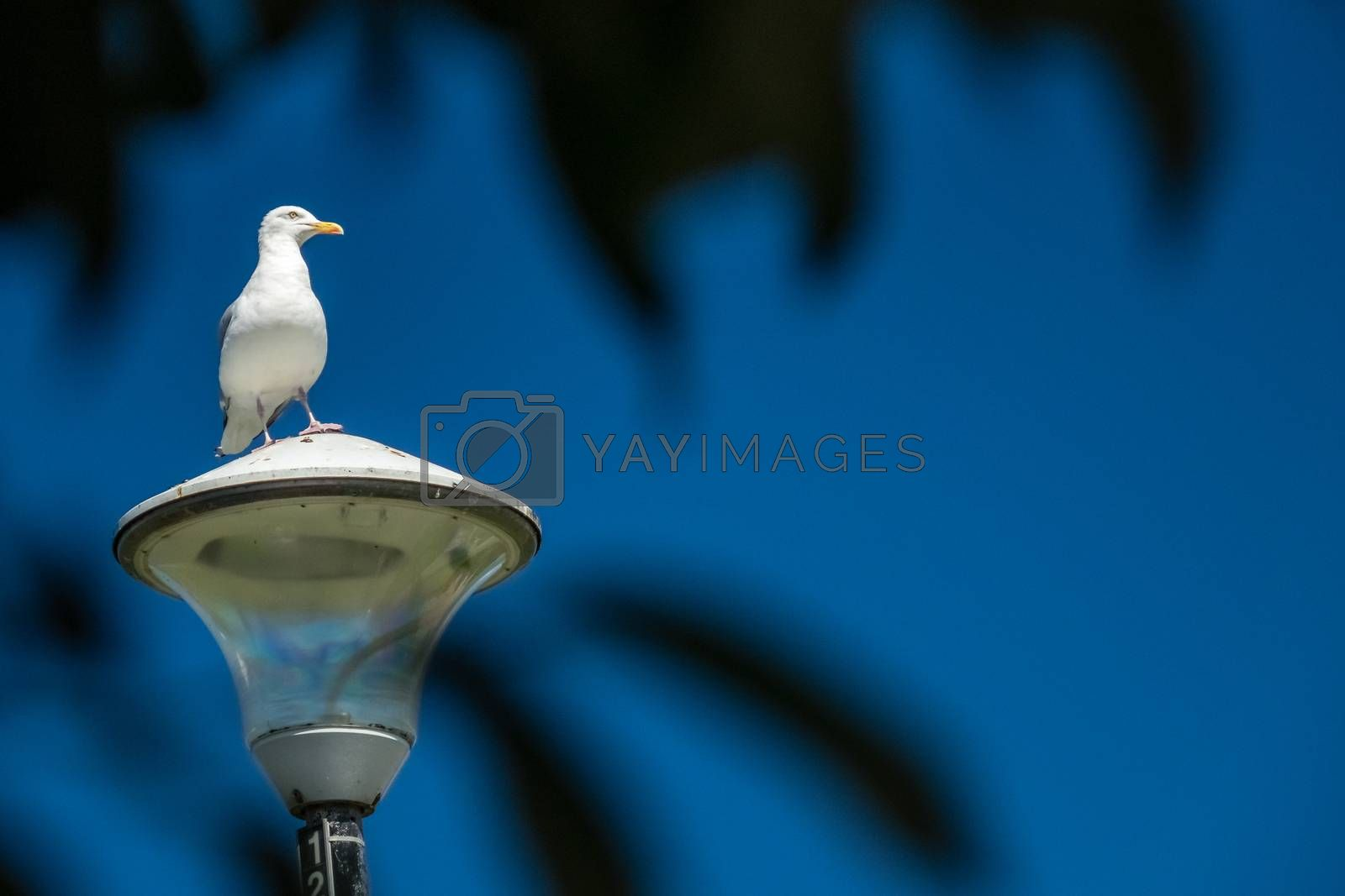 Seagull sitting on a lamppost with blue sky in the background