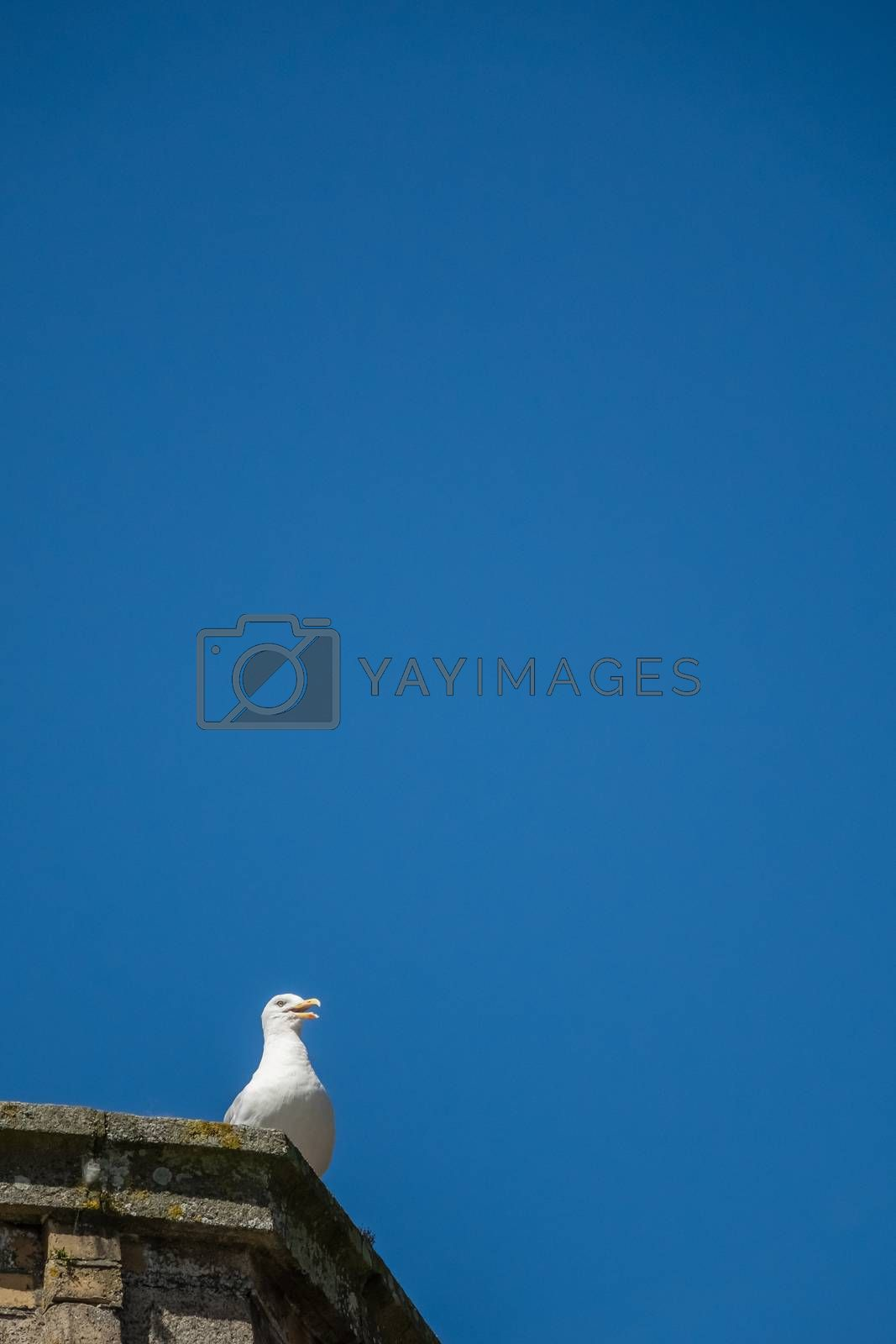 Seagull sitting on a roof of a building with blue sky in the background