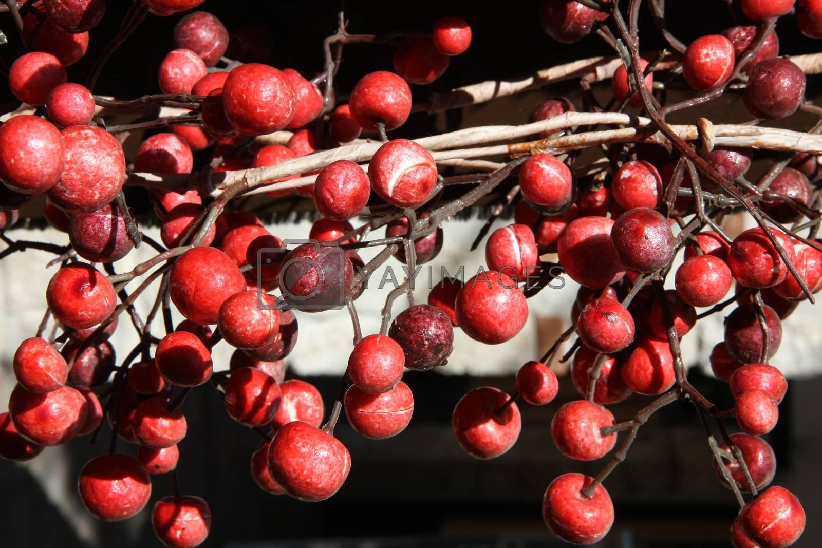 Close up of unknown wild red berries on Greek peninsula Halkidiki