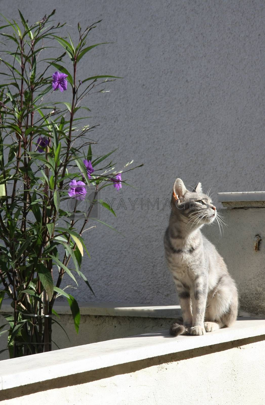 Little domestic cat on the wall enjoying on the summer sun