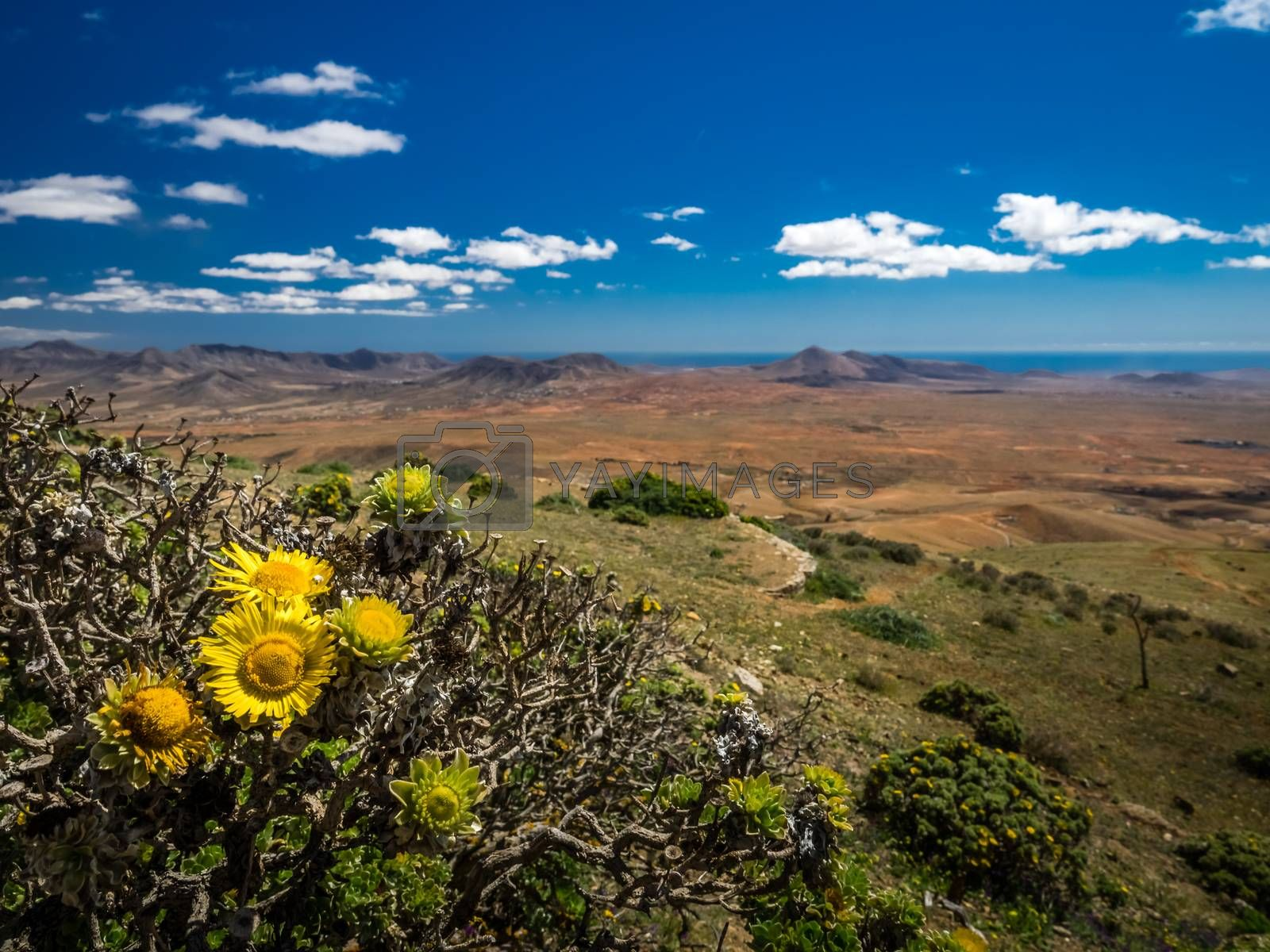 Wide angle view of the landscape of Fuerteventura as seen from the Morro Velosa viewpoint, Canary Islands, Spain