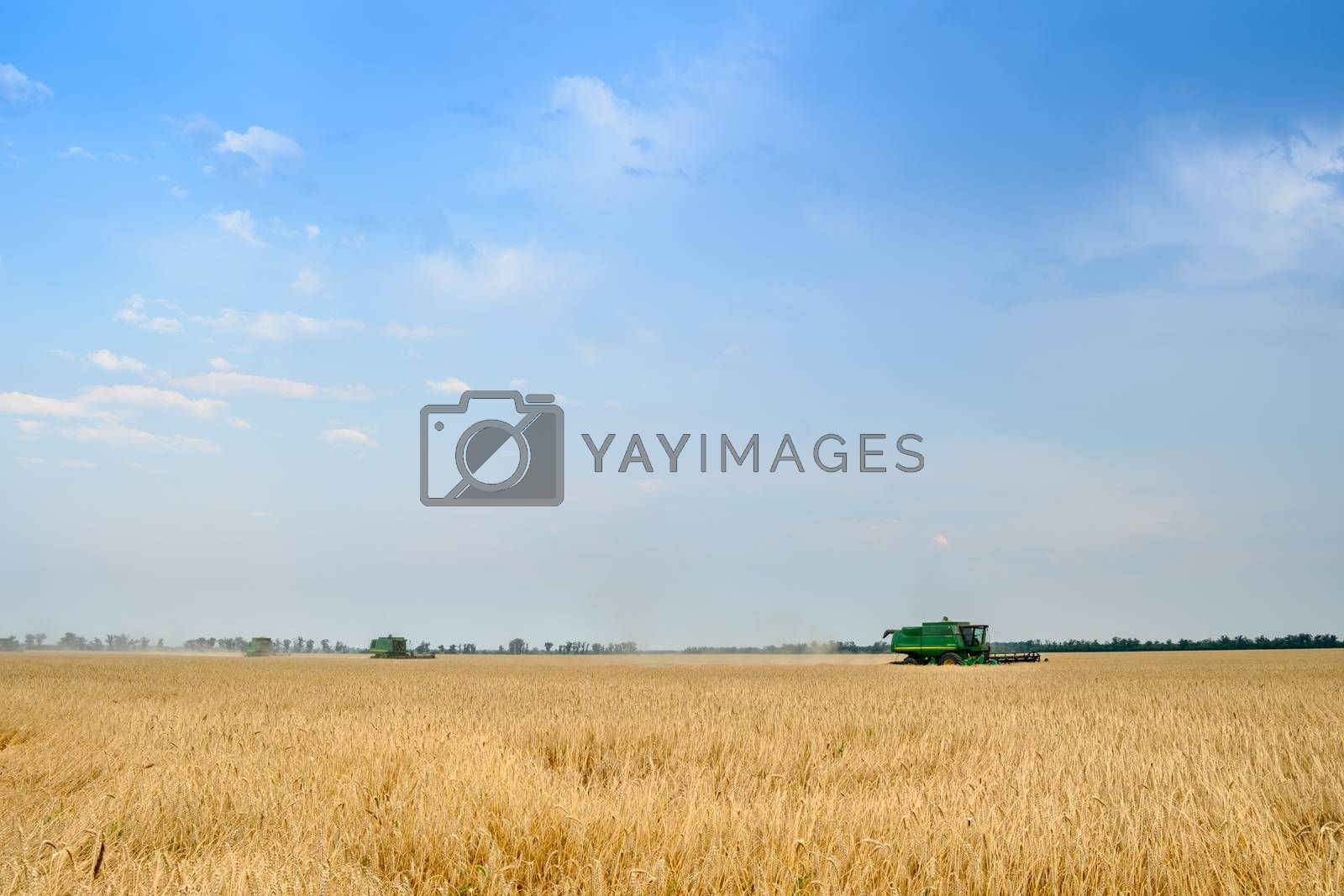 Four Combine Harvesters Harvesting Wheat in the Field under Blue Sky