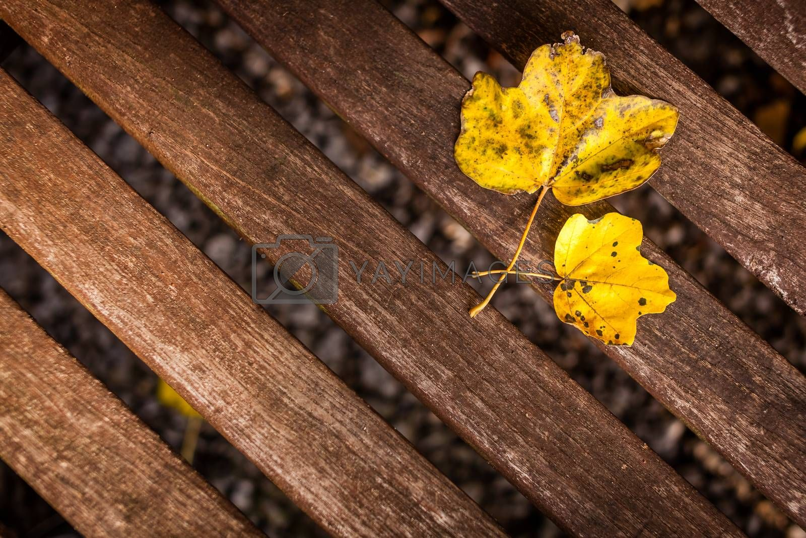 Two yellow leaves on a wooden table