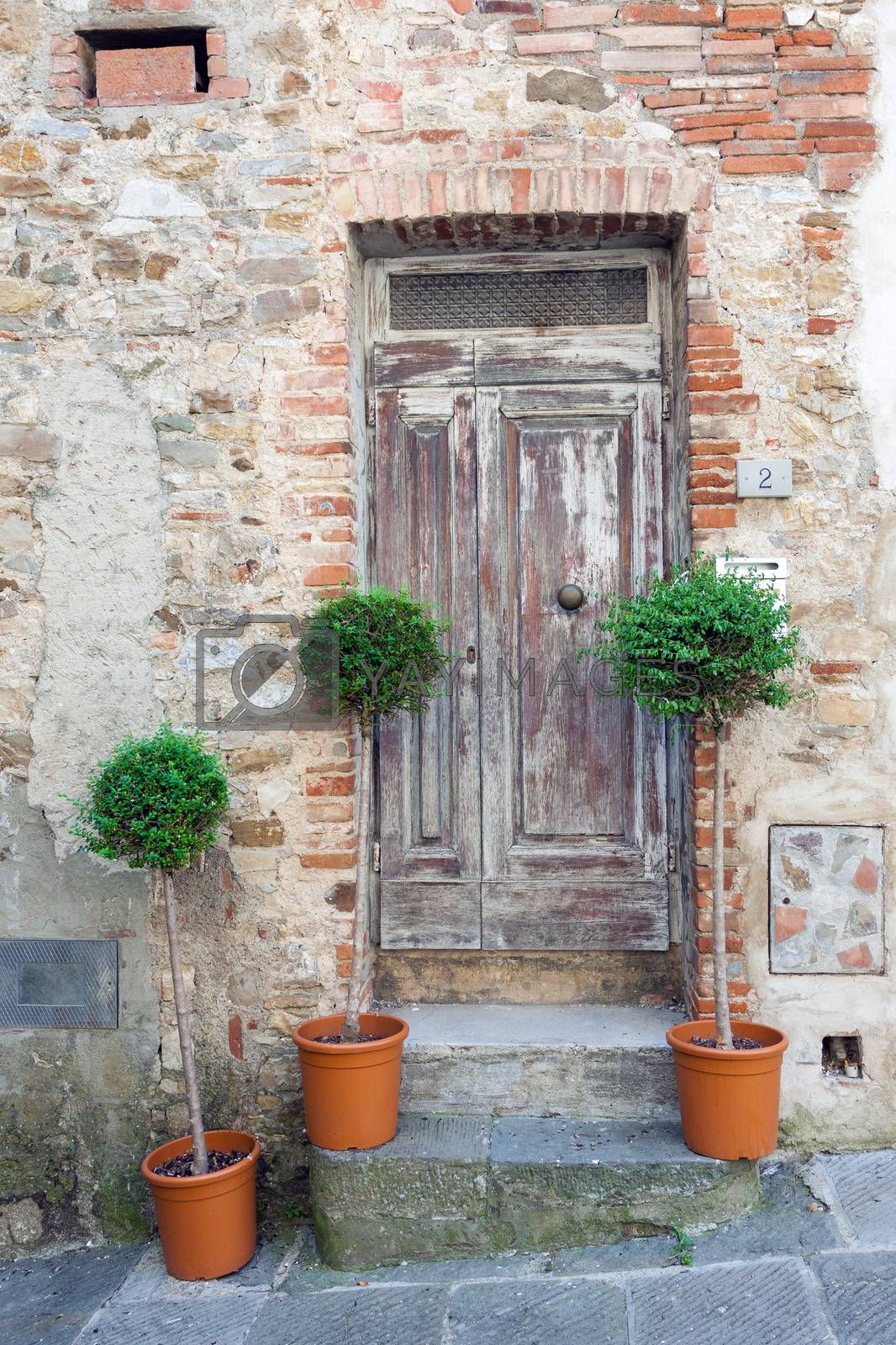 Traditional old wooden doors in Italy with three decorative boxwood trees growing in flower pots