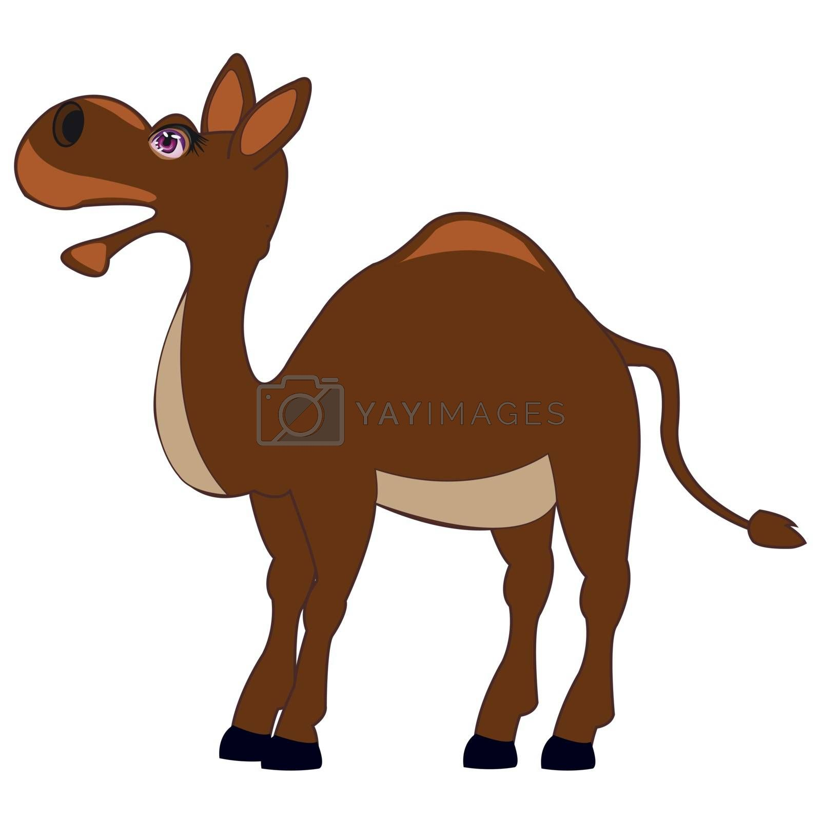 Vector illustration of the camel on white background