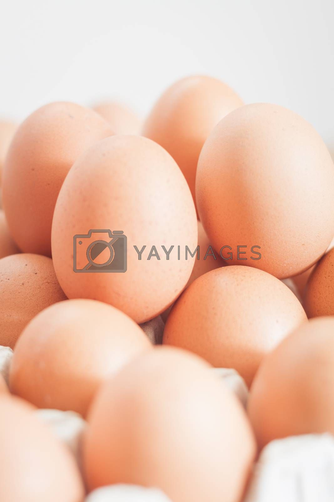 Closed up fresh chicken eggs, stock photo