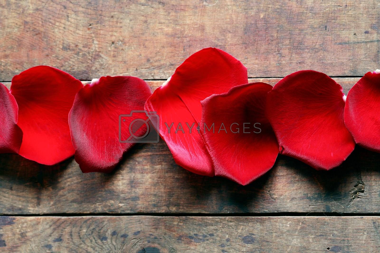 Romance concept. Few red rose petals in a row on wooden background