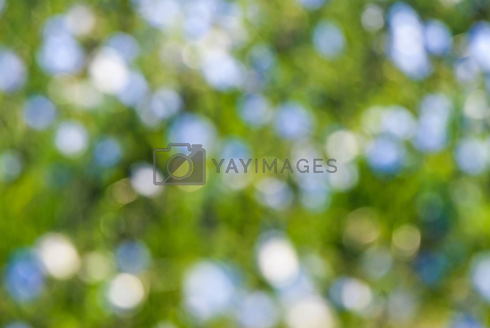 Holiday summer background for your design