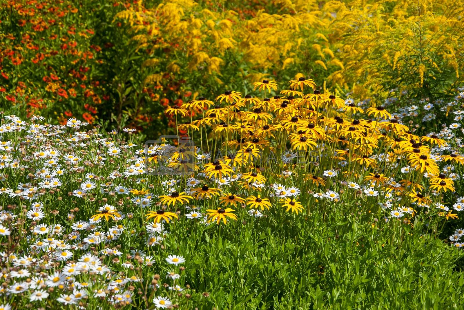 Spring landscape with different flowers meadow in park