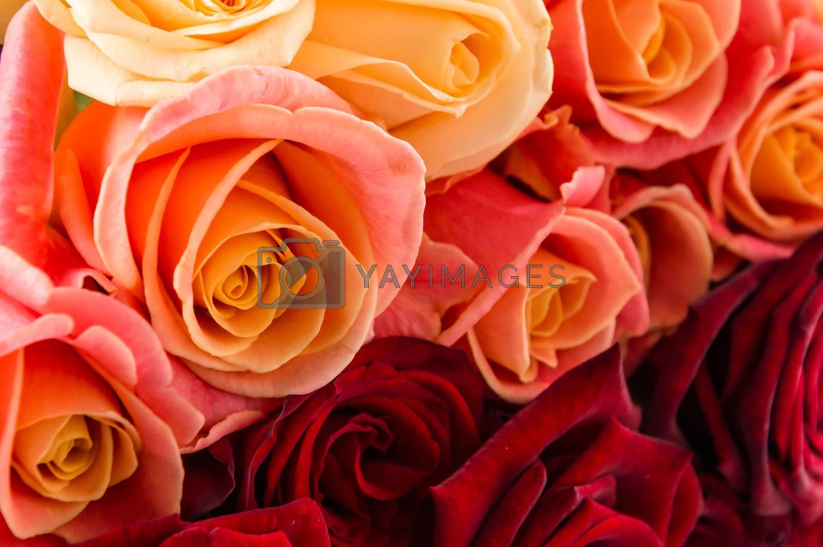 Many rose flowers