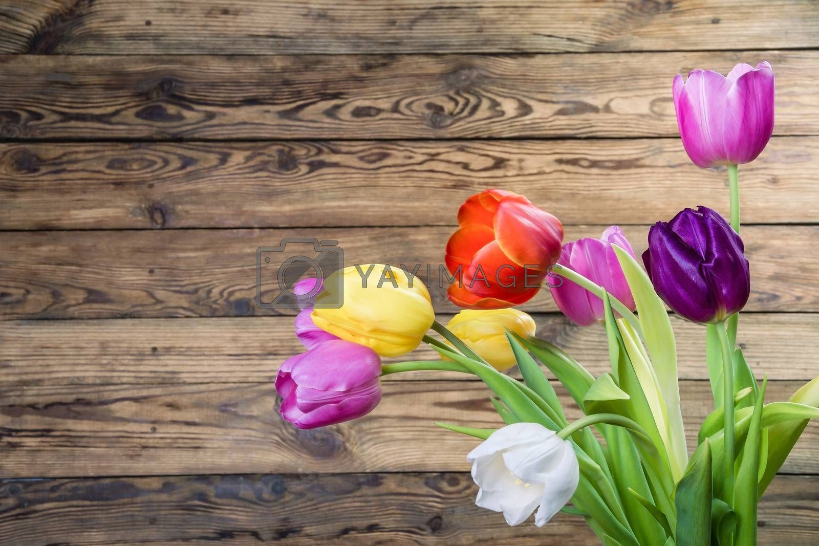Rustic background with tulip flowers