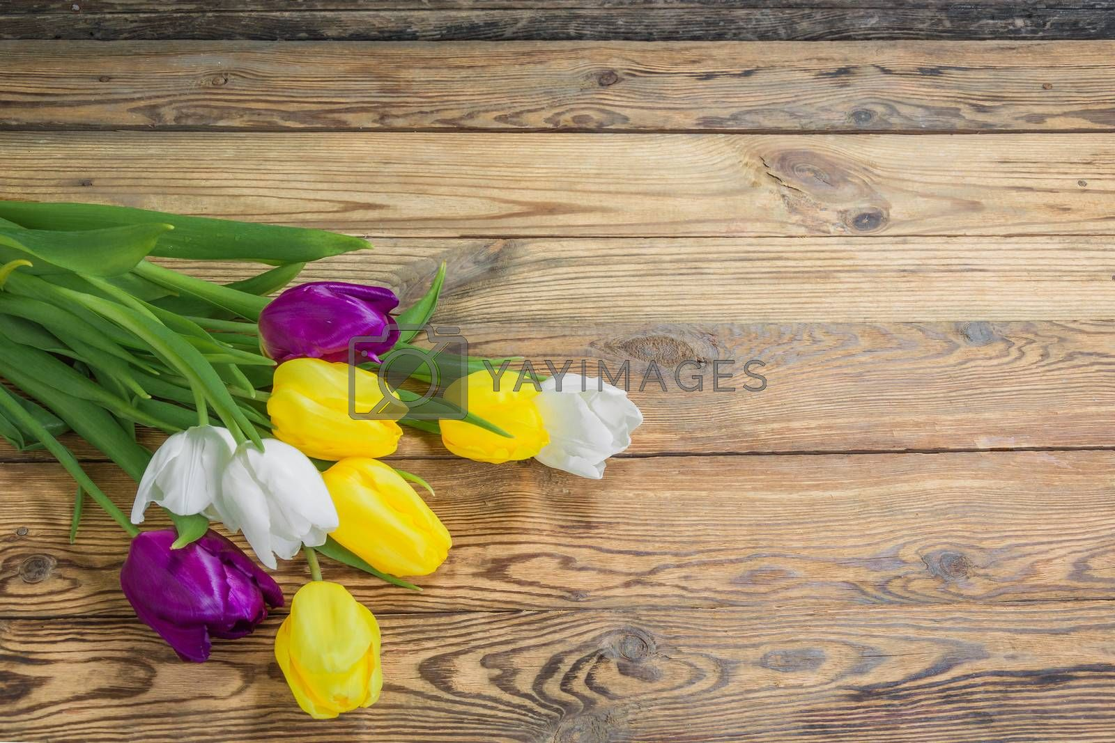 Beautiful tulip flowers on rustic wooden background