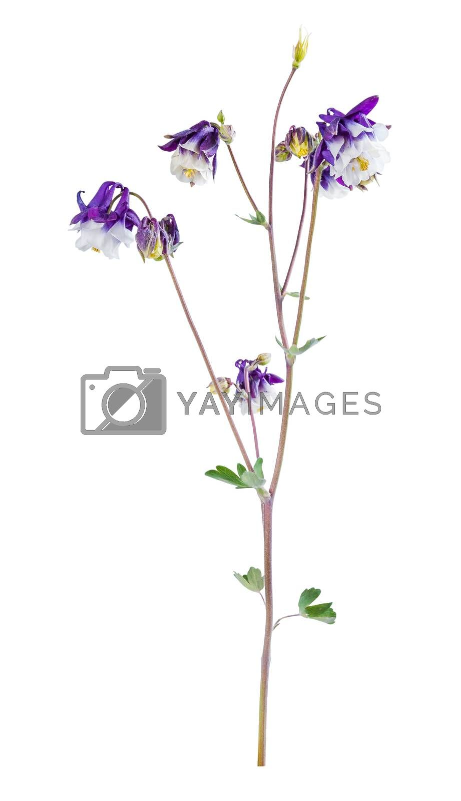 Beautiful flower isolated on white background